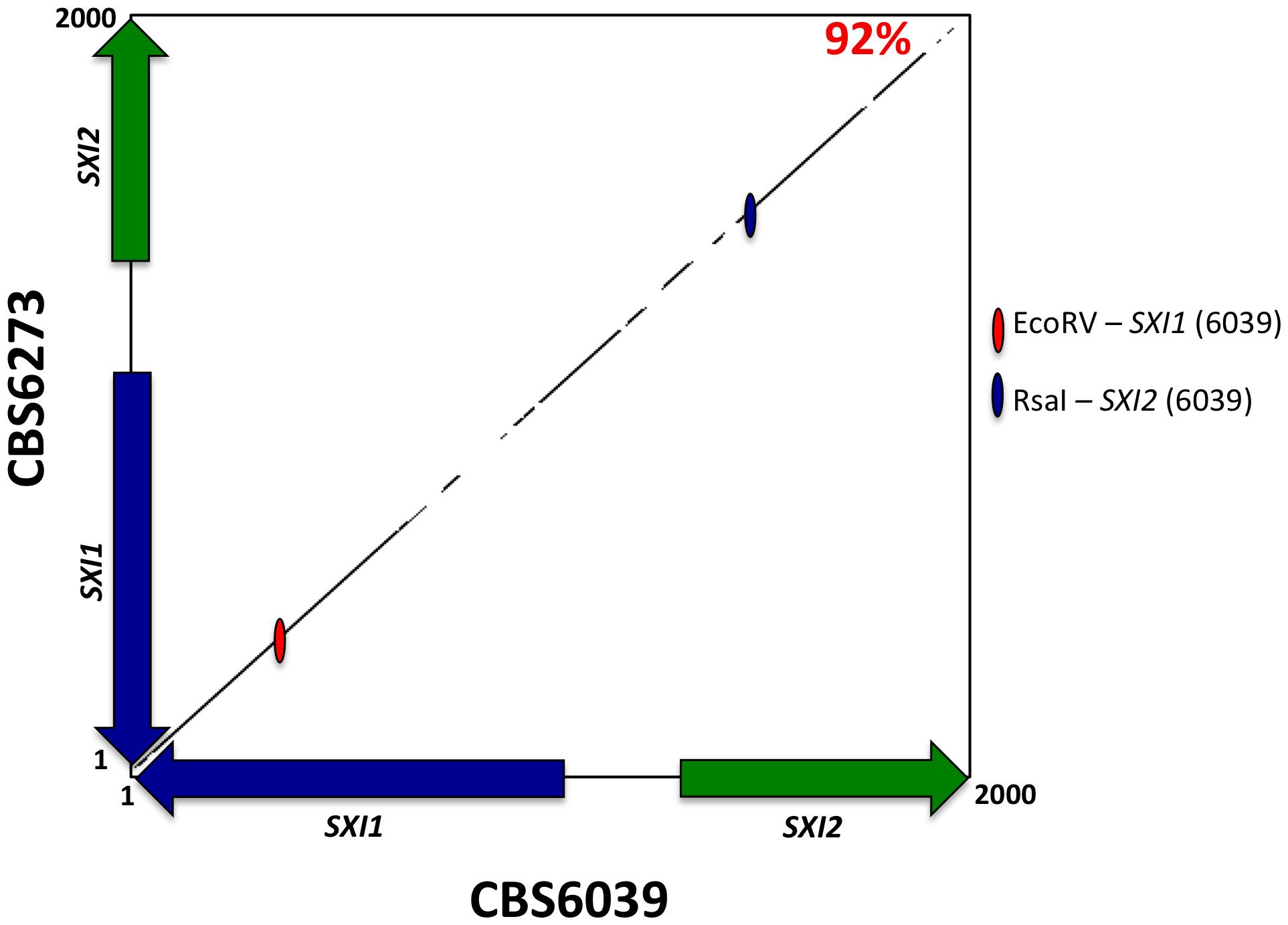 The homeodomain genes, <i>SXI1</i> and <i>SXI2</i>, define <i>MAT</i>.