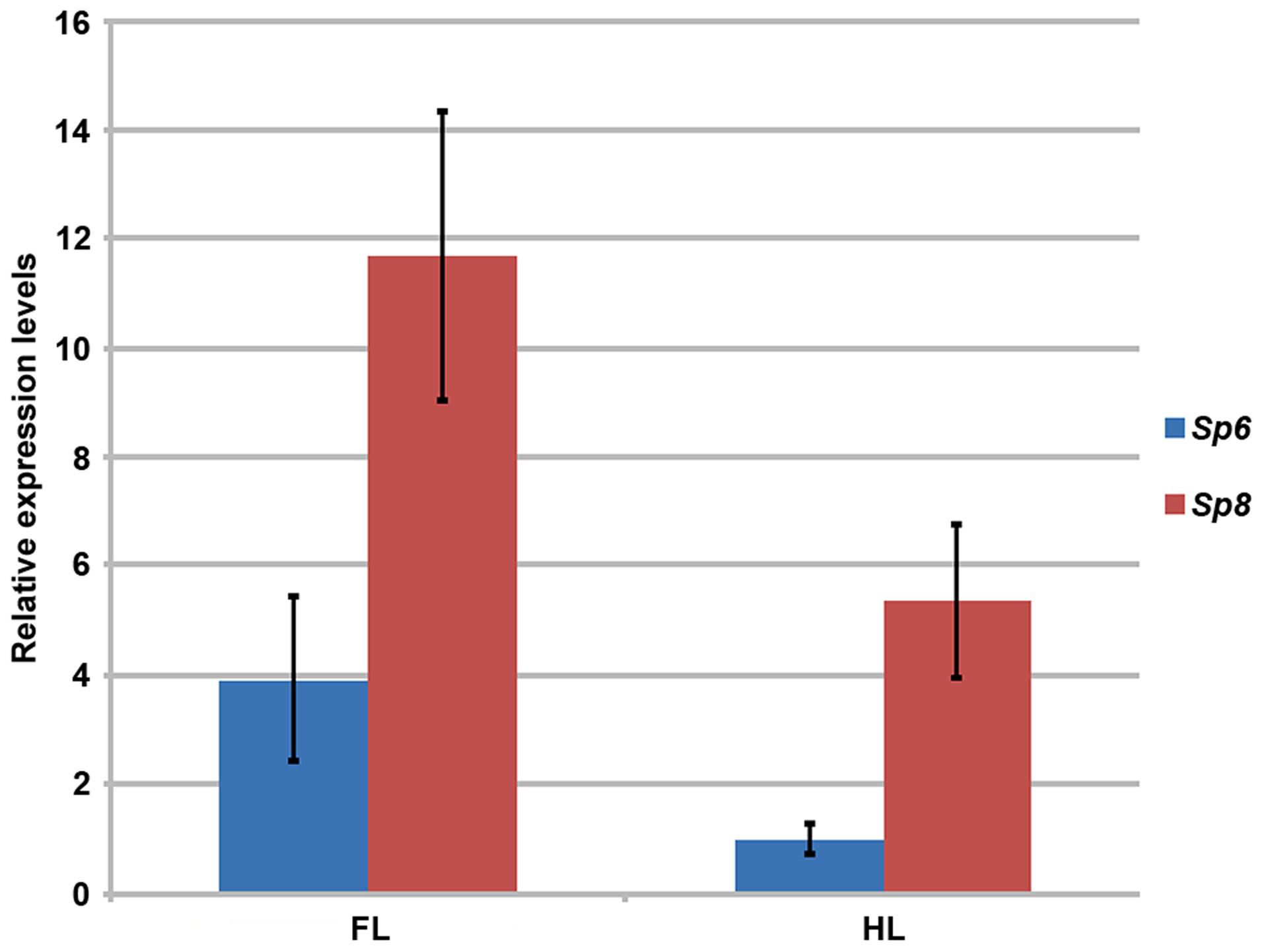RT-qPCR quantification of <i>Sp6</i> and <i>Sp8</i> transcripts in the limb ectoderm of E10.5 control embryos.