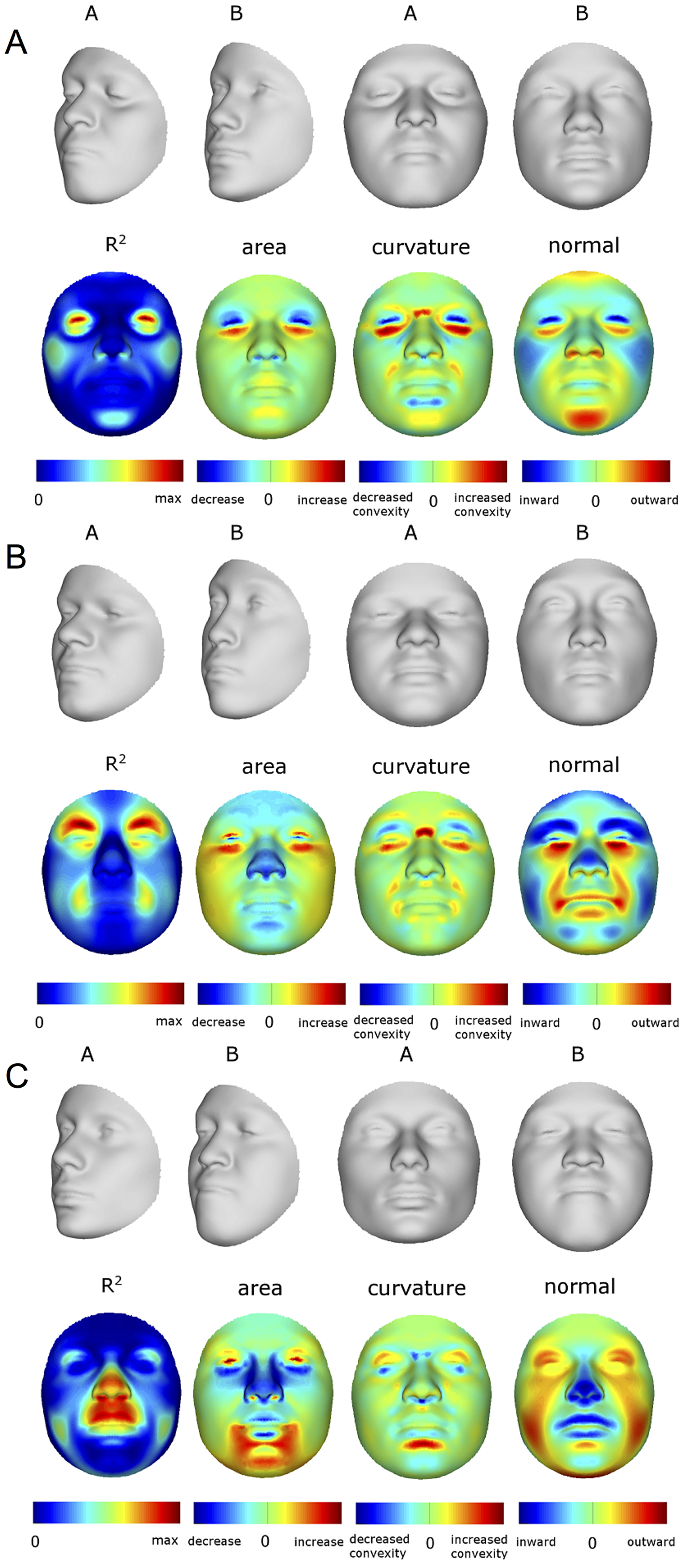 Transformations and heat maps showing how face shape is affected by three particular RIP-G variables.