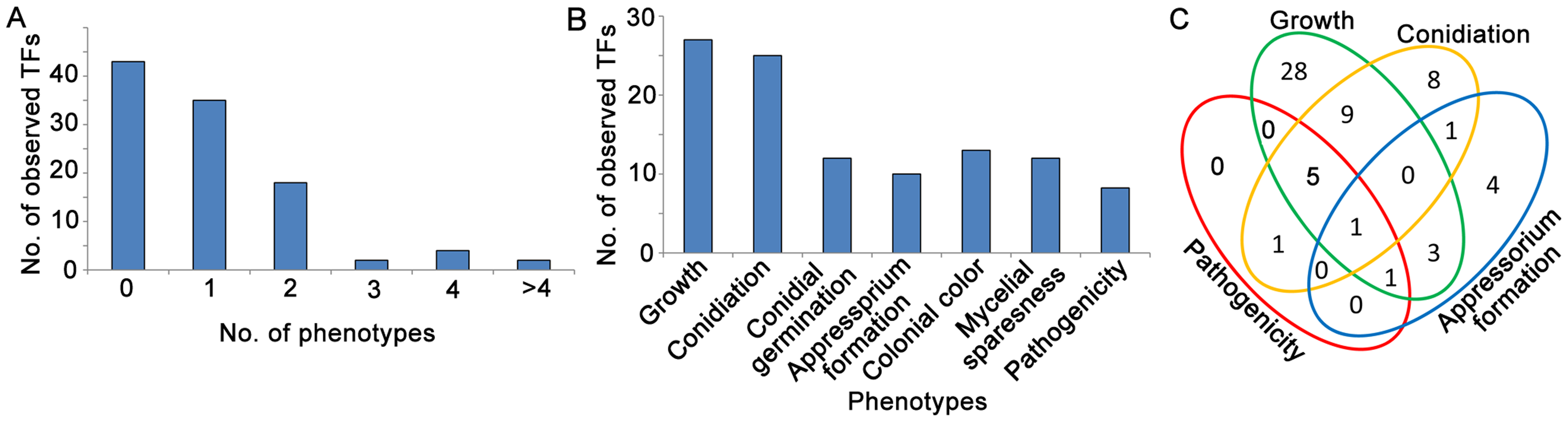 Analysis of Zn<sub>2</sub>Cys<sub>6</sub> transcription factor mutant phenotypes in fungal development stages.