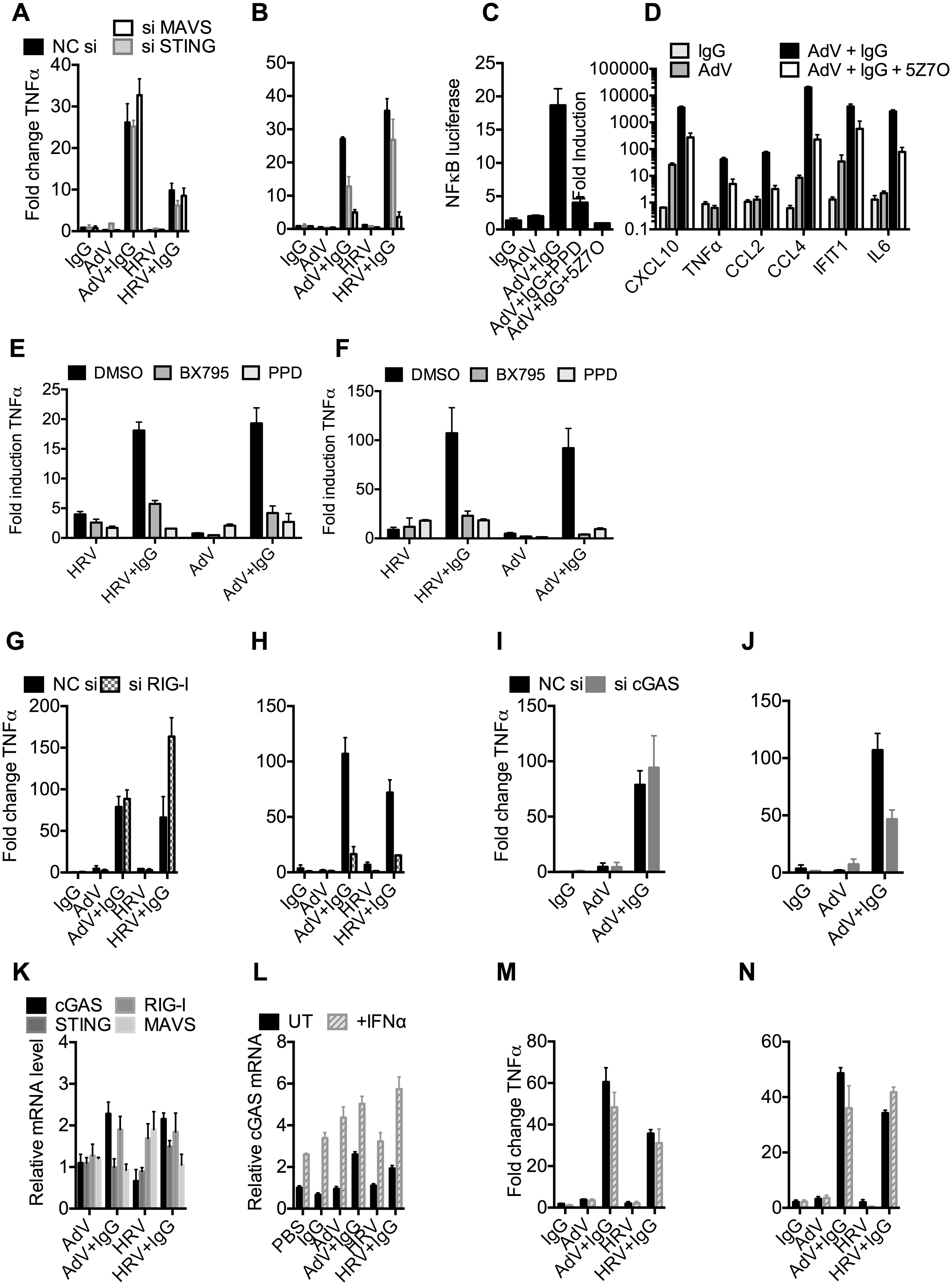 TRIM21 and antibody promote detection of viral nucleic acids by cytosolic sensors.