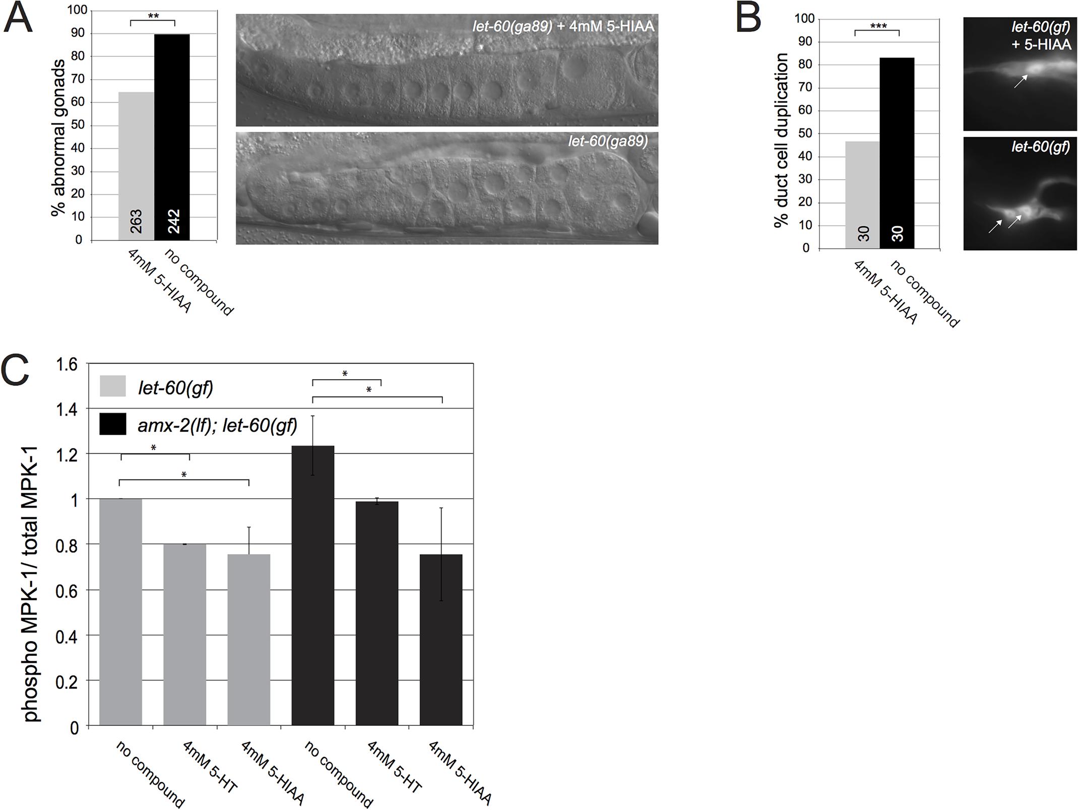 5-HIAA inhibits RAS/MAPK signaling and MPK-1 phosphorylation in multiple organs of <i>C</i>. <i>elegans</i>.