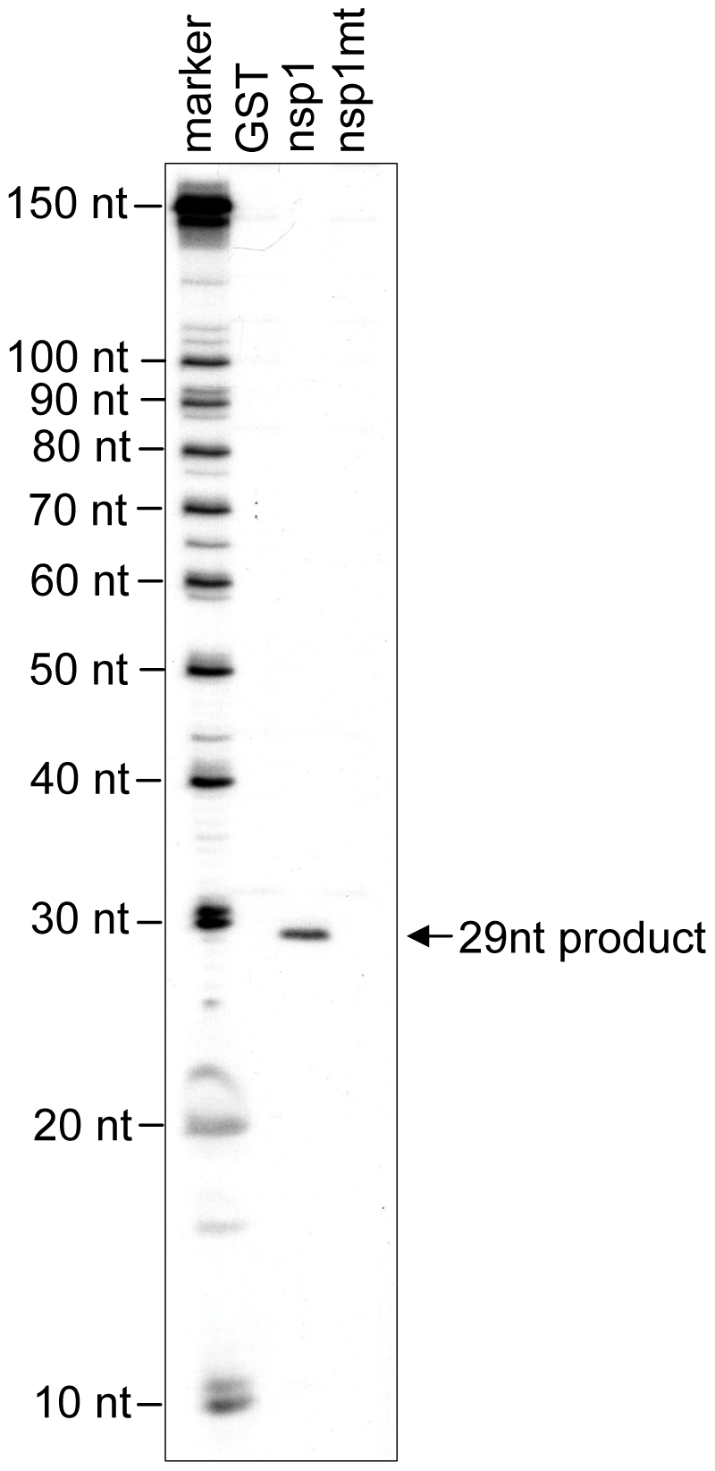 Characterization of nsp1-induced RNA fragment of ALA mRNA.