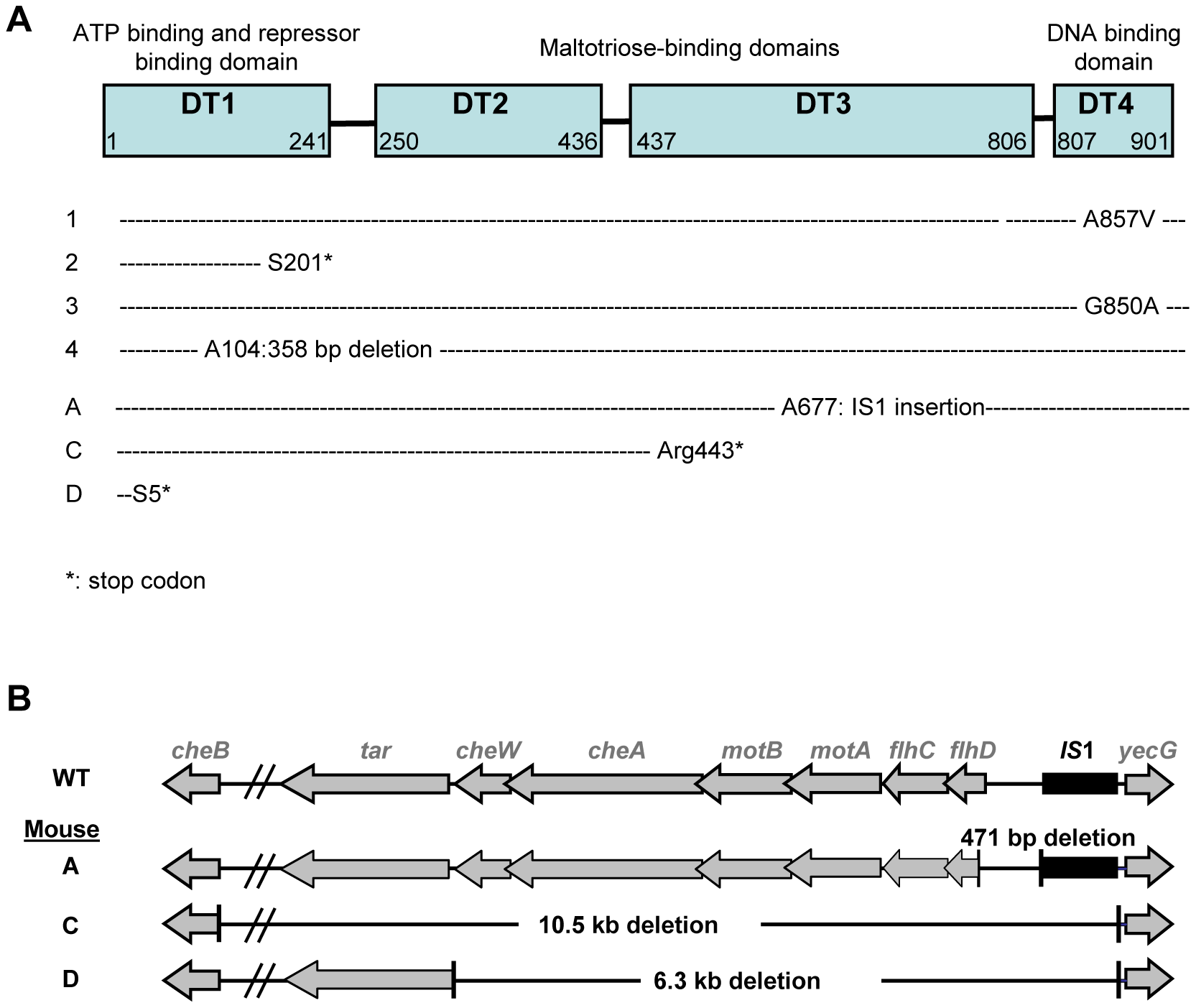 Identification of selected mutations.