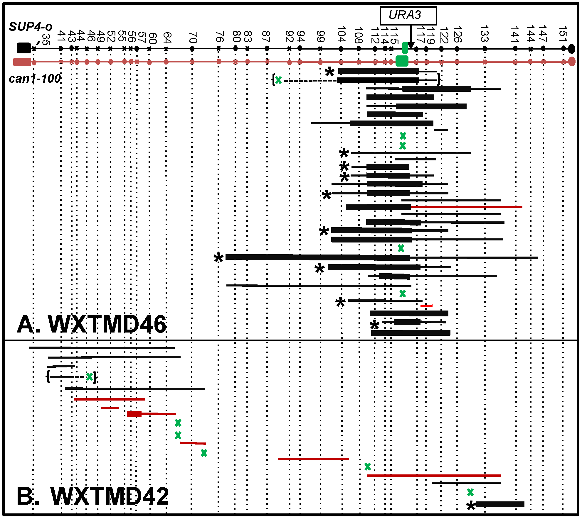 Mapping of RCOs and associated gene conversion events in WXTMD46 (GAA<sub>230</sub>/GAA<sub>20</sub>) and in WXTMD42 (GAA<sub>20</sub>/GAA<sub>20</sub>).
