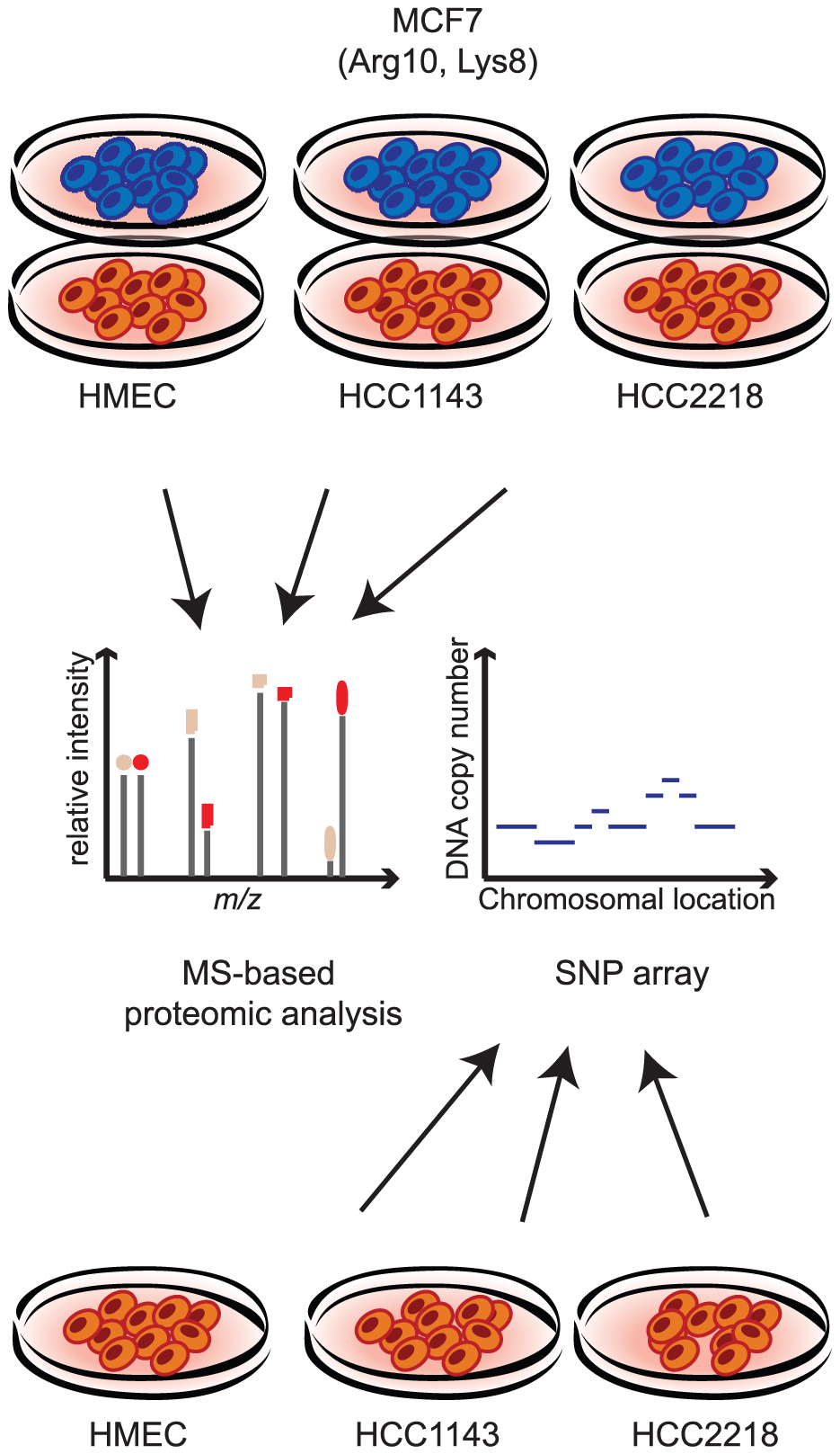Measuring proteome and genome changes in cancer versus normal cells.