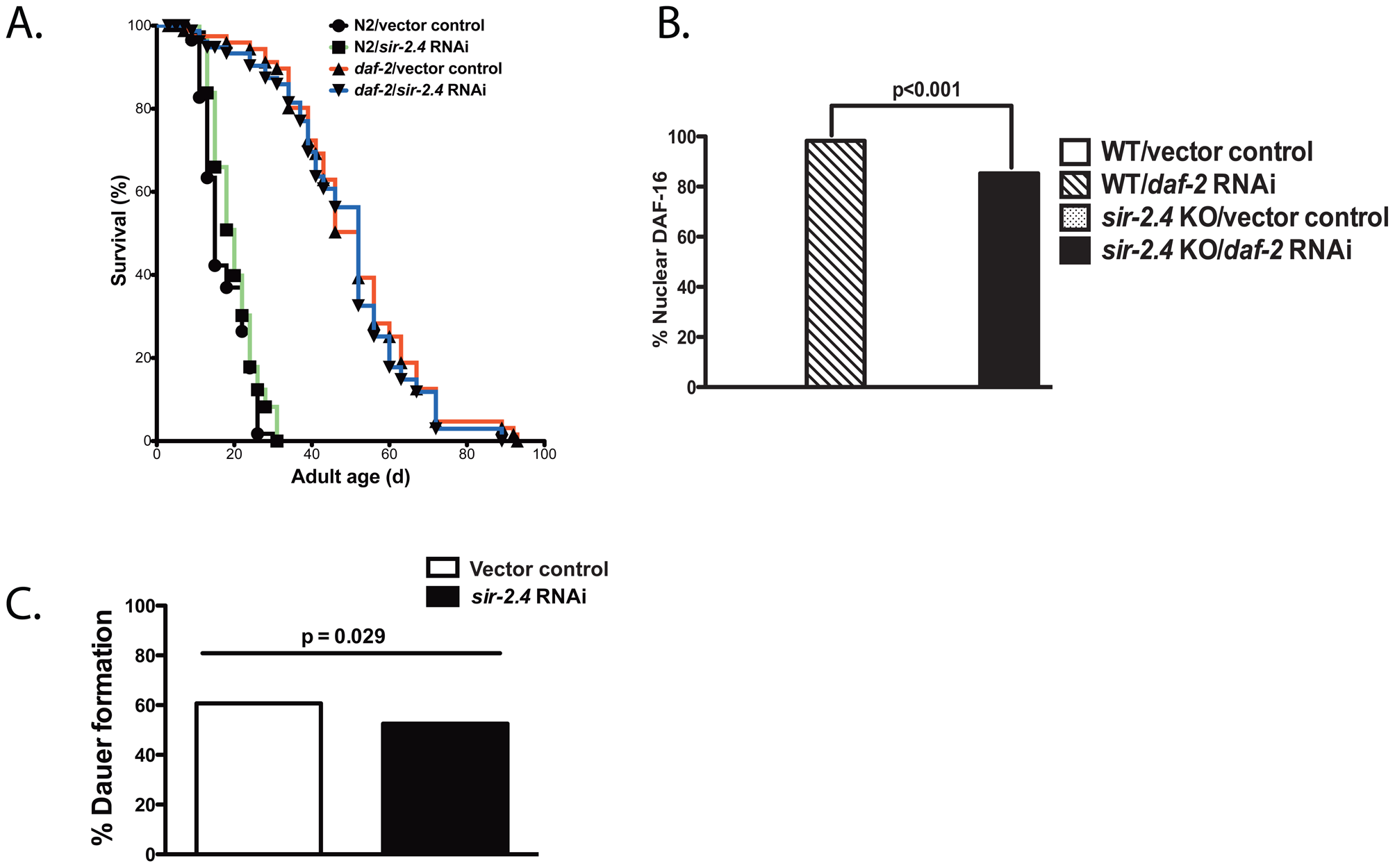 Minimal impact of SIR-2.4 on IIS-induced longevity, DAF-16 nuclear localization induced by reduced IIS, and dauer formation.