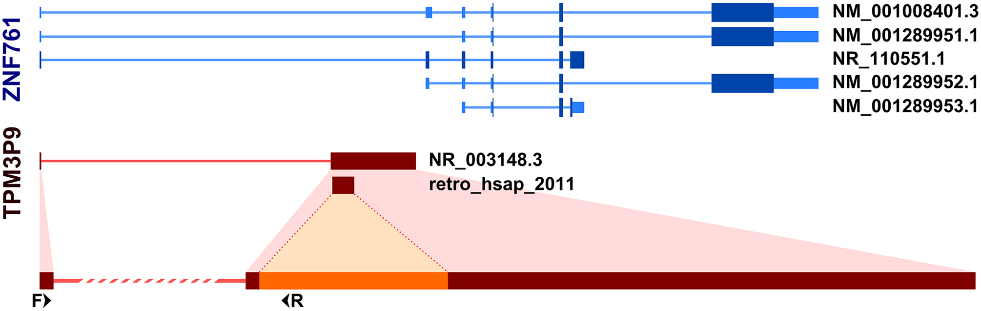 Incorporation of host gene exon by retrogene retro_hsap_2011.