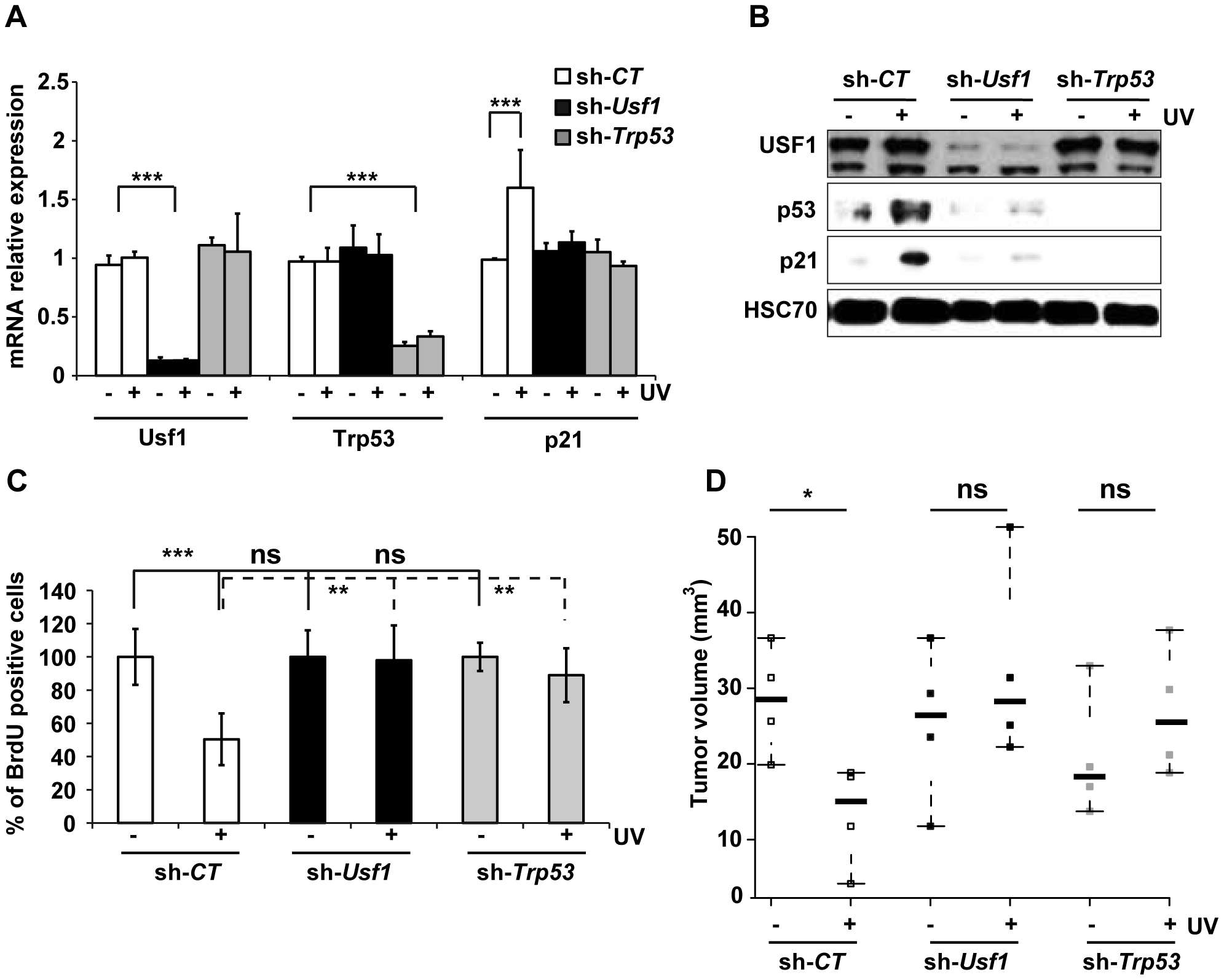 USF1 mediates p53-dependent cell cycle arrest.