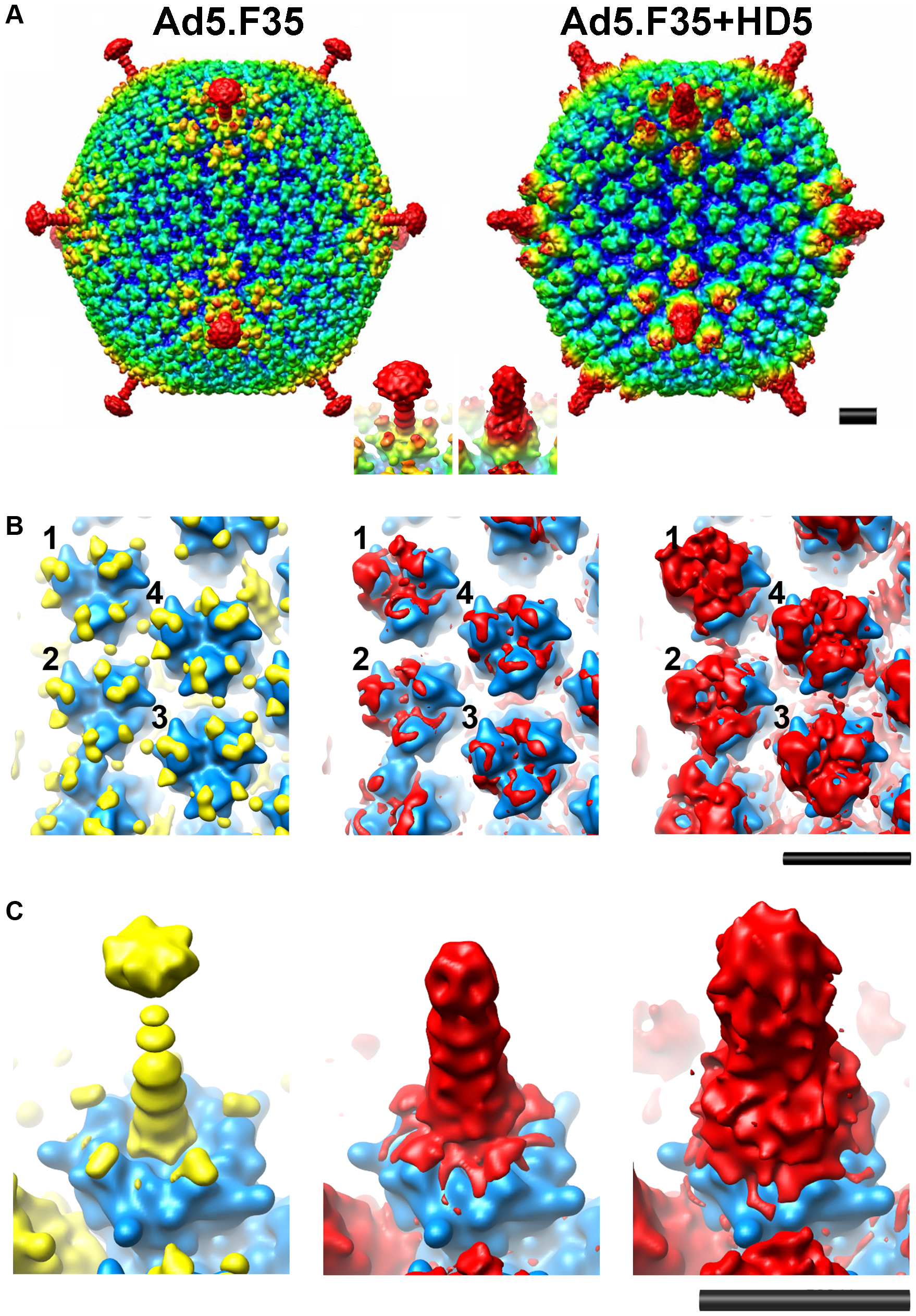 CryoEM structures of Ad5.F35 and Ad5.F35+HD5.