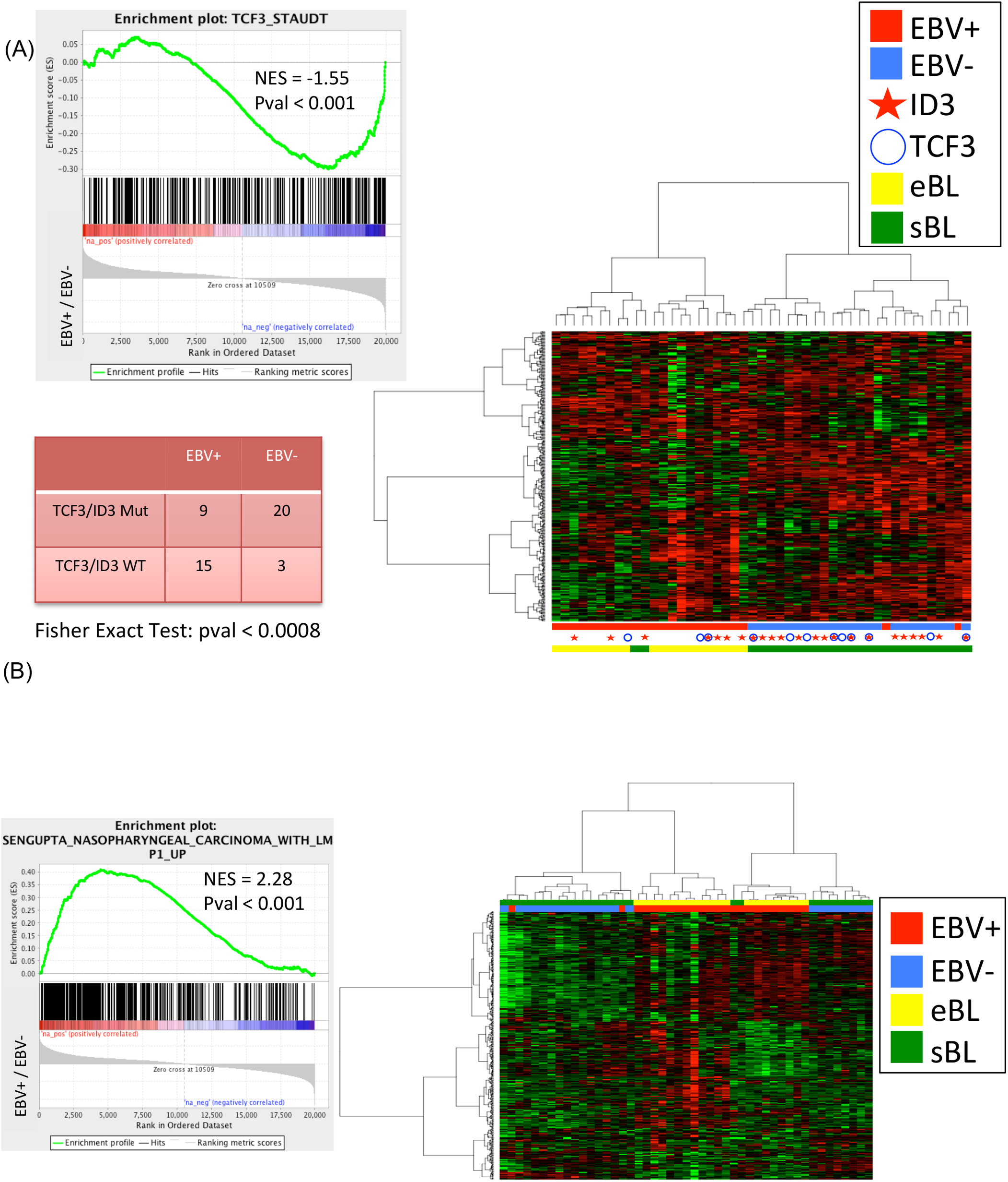 (A) the dendrogram classifies the samples into EBV-positive and EBV-negative BL independently on the specific subtype with an accuracy of 96% (45/47). (B) GSEA C2 analysis on genes differentially expressed between EBV-positive and EBV-negative cases detects a significant enrichment for the <i>LMP-1</i> gene set signature. GSEA: gene set enrichment analysis.