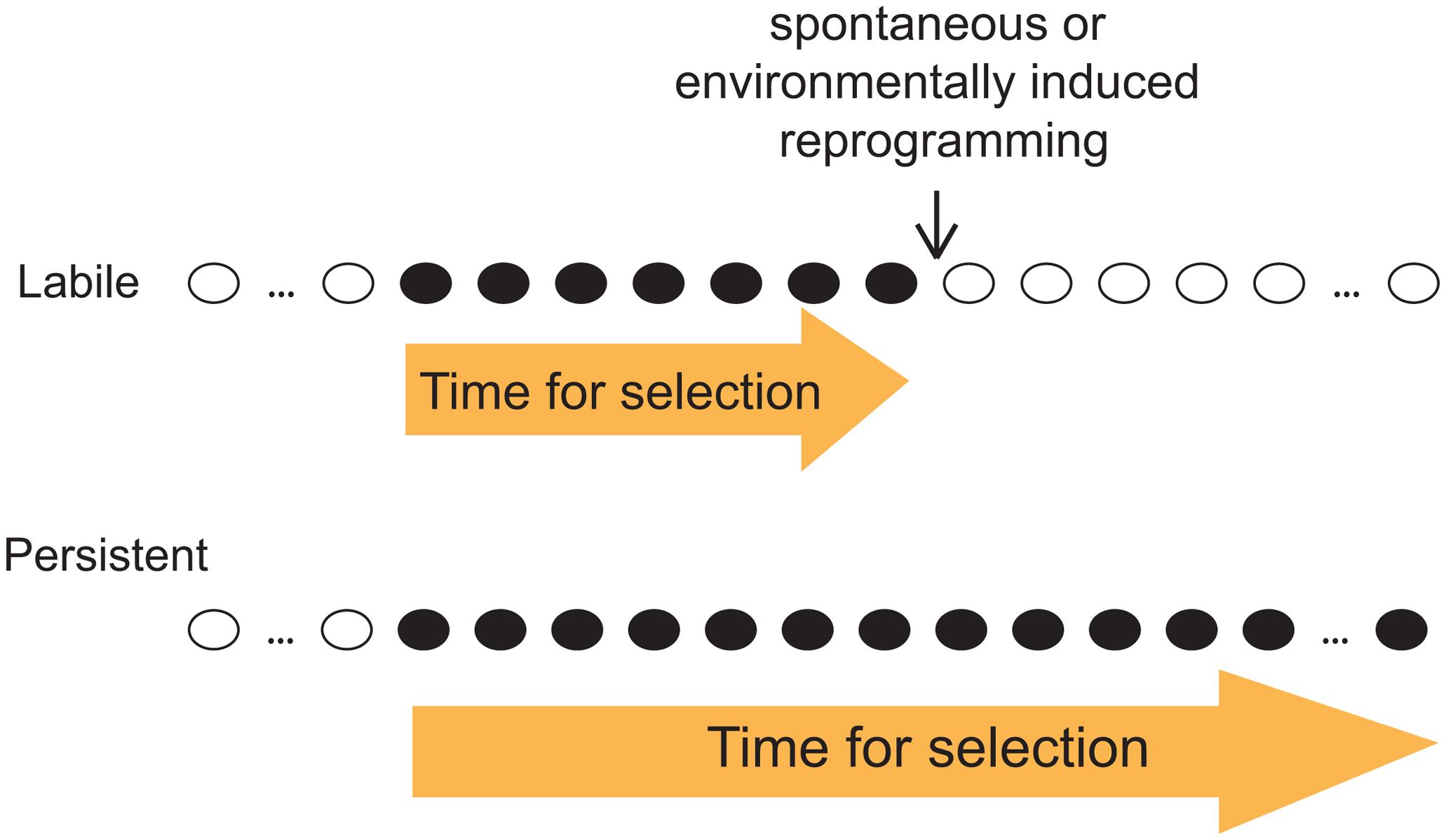 Distinct evolutionary implication of labile and persistent epi-polymorphisms.