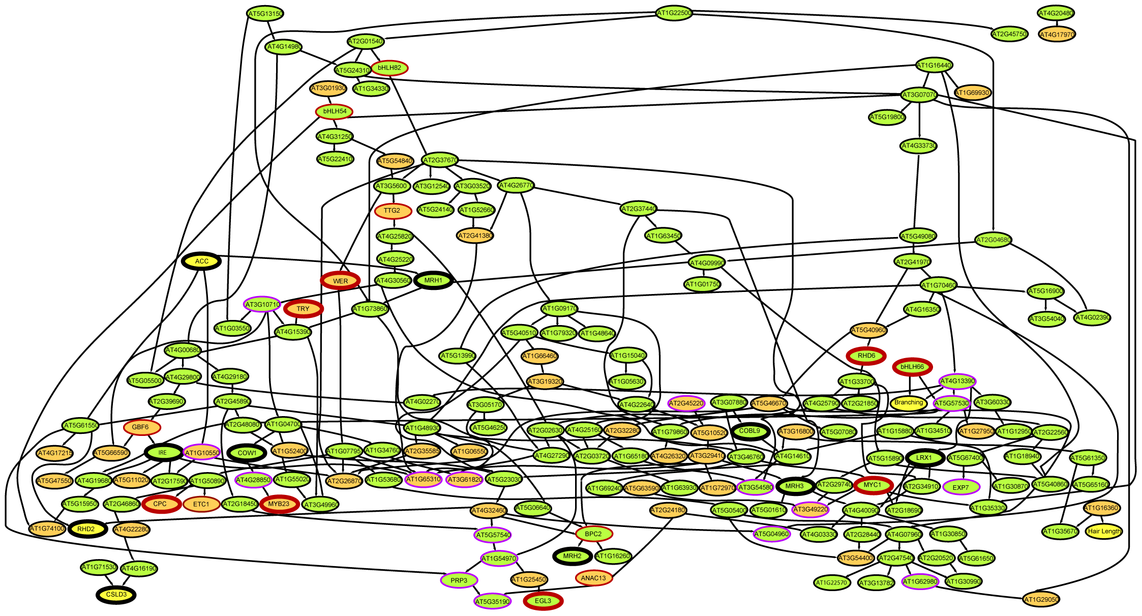 Bayesian modeling from root epidermal transcriptome data.