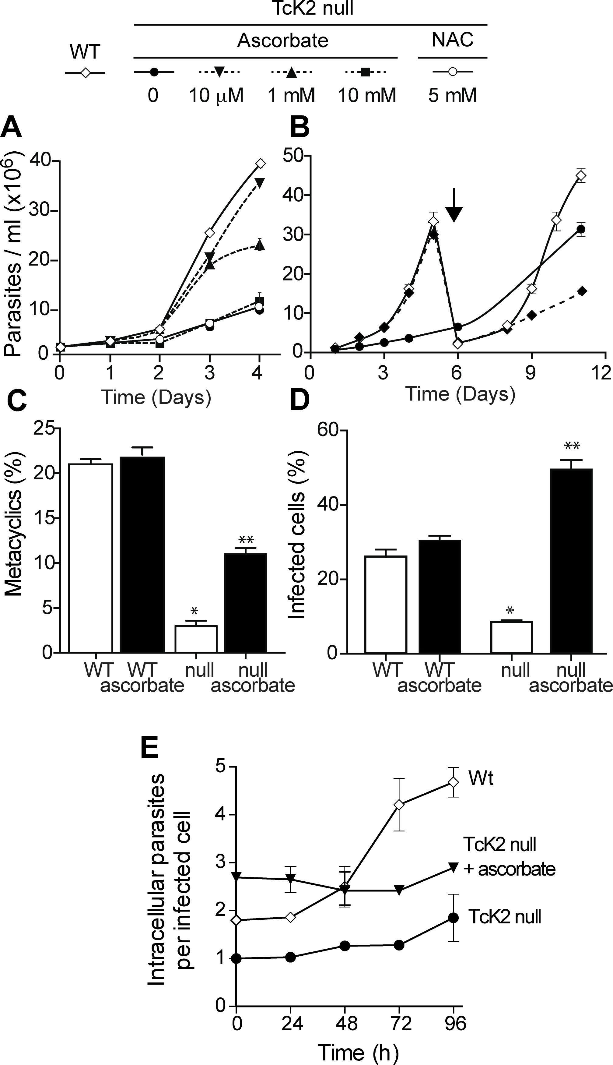Ascorbate restores TcK2 null parasite growth, differentiation and infectivity, but not intracellular proliferation.