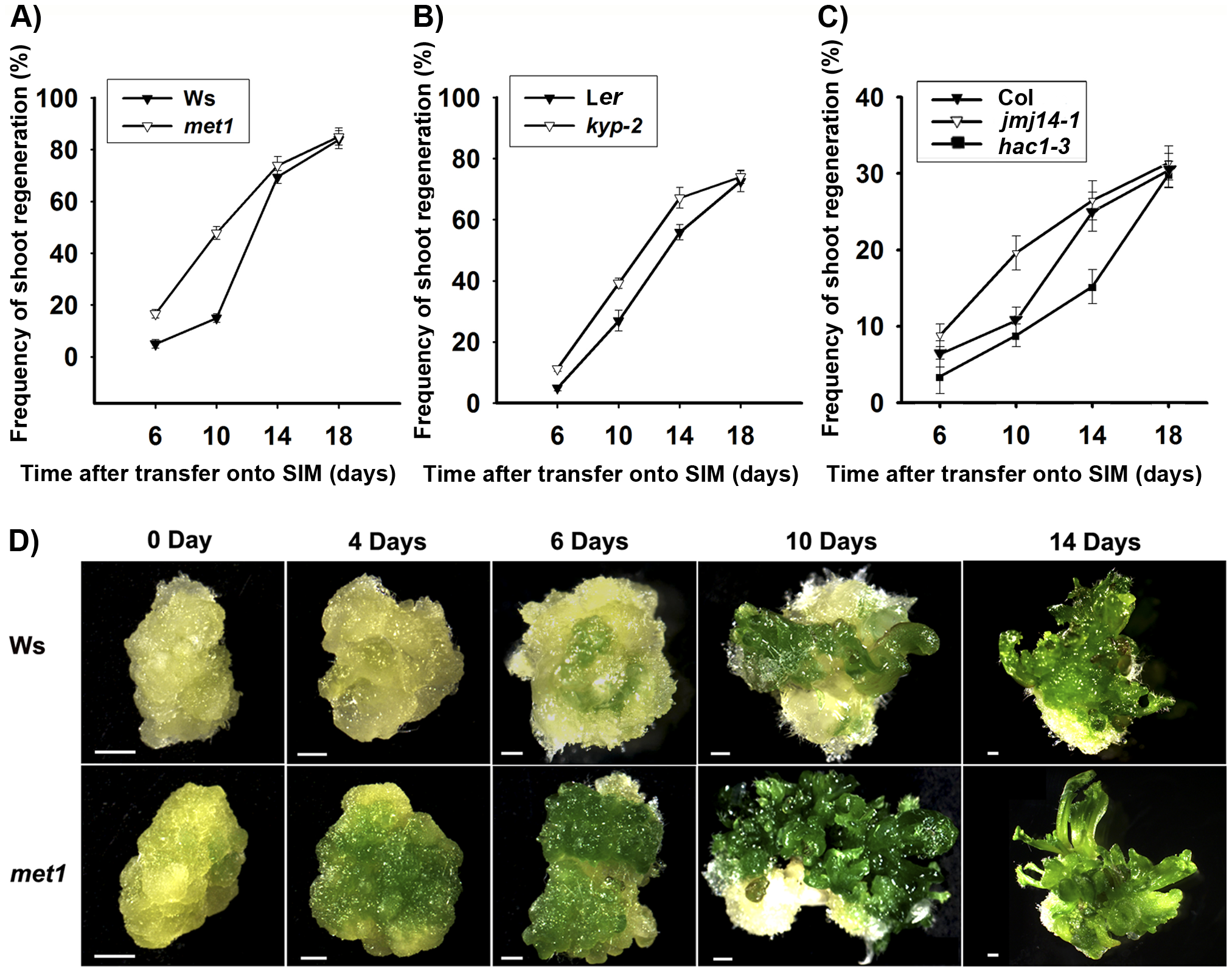 Mutation in key epigenetic genes alters the rate of <i>Arabidopsis</i> shoot regeneration <i>in vitro</i>.