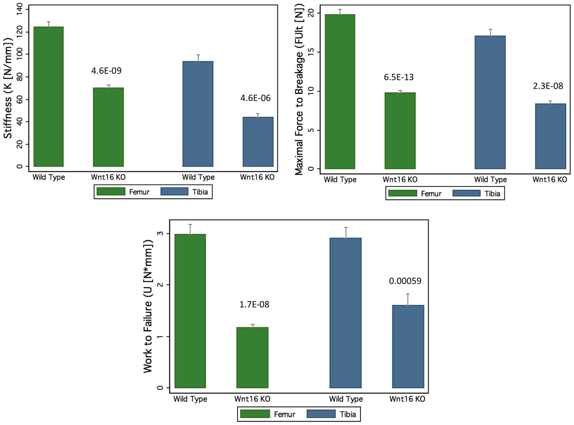 Decrease of bone strength of <i>Wnt16</i> knockout mice at femur and tibia.