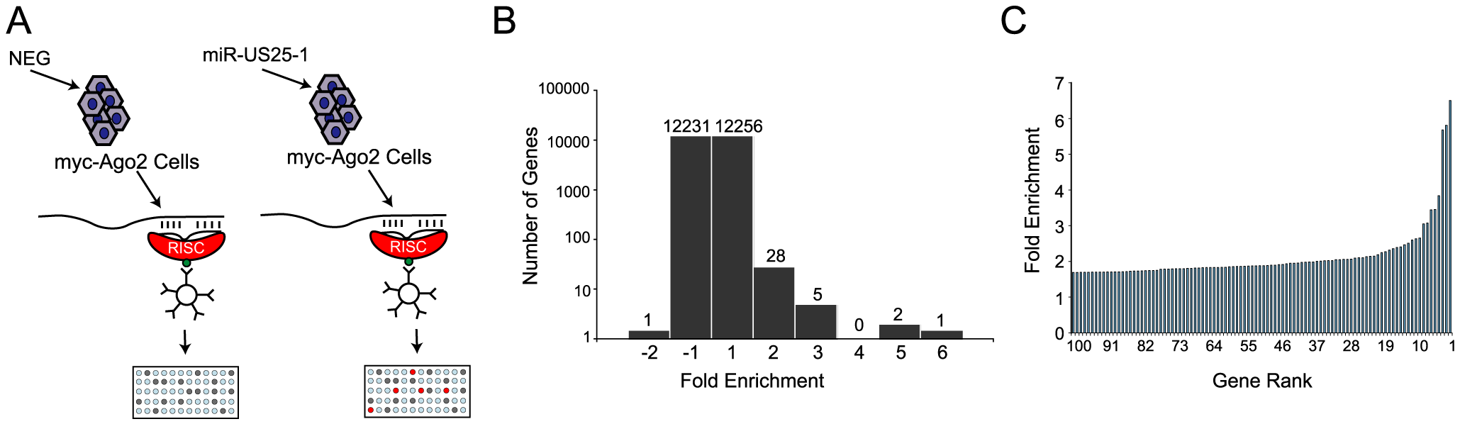 RISC-IP analysis of HCMV encoded miRNA, miR-US25-1.