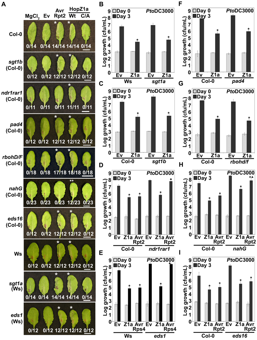 HopZ1a recognition is independent of known signaling components of <i>R</i> gene- mediated immunity.