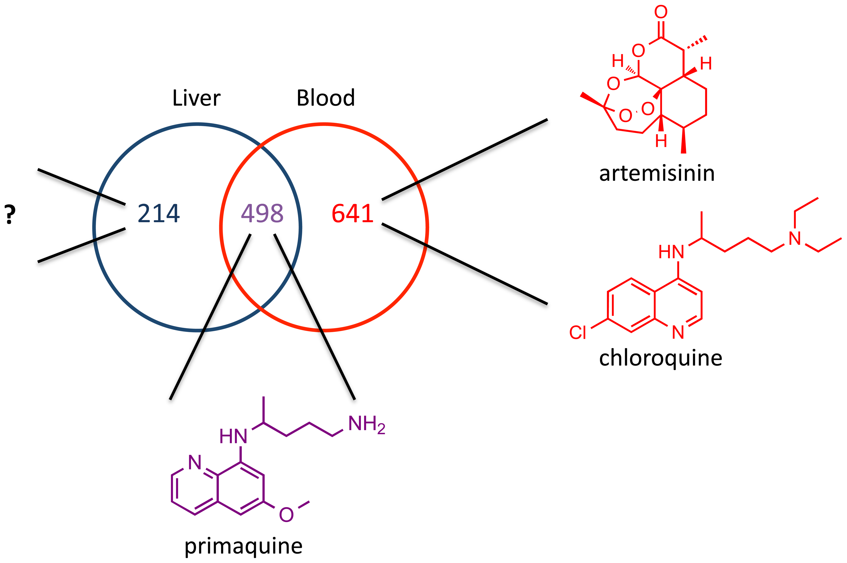 Potential for liver stage specific inhibitors.