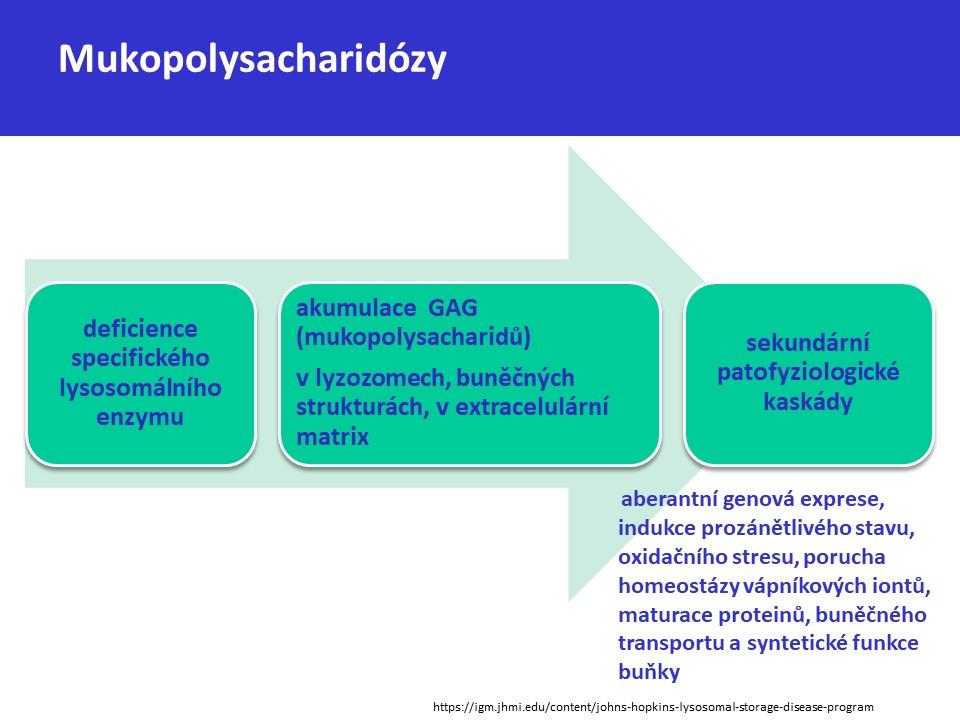 Mukopolysacharidóza typ II – Hunterův syndrom - 3