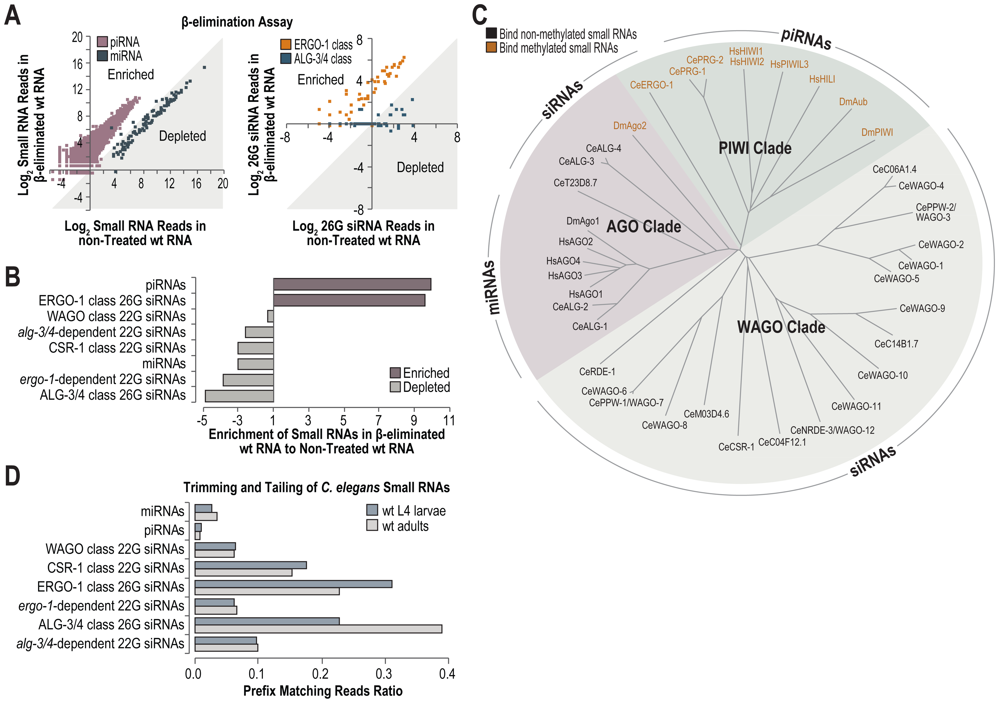 High-throughput sequencing of methylated small RNAs.