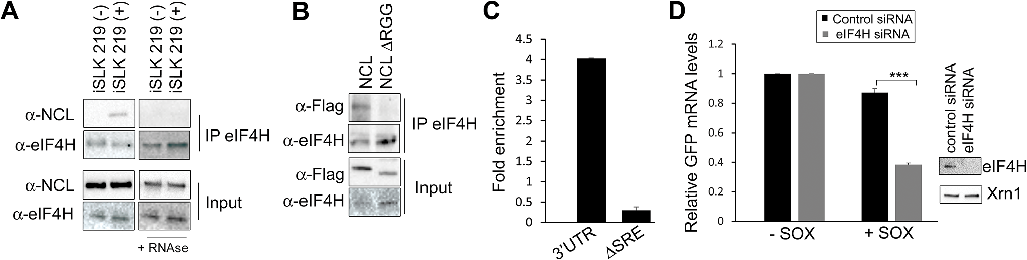 IL-6 escape is potentiated by an NCL-eIF4H interaction.