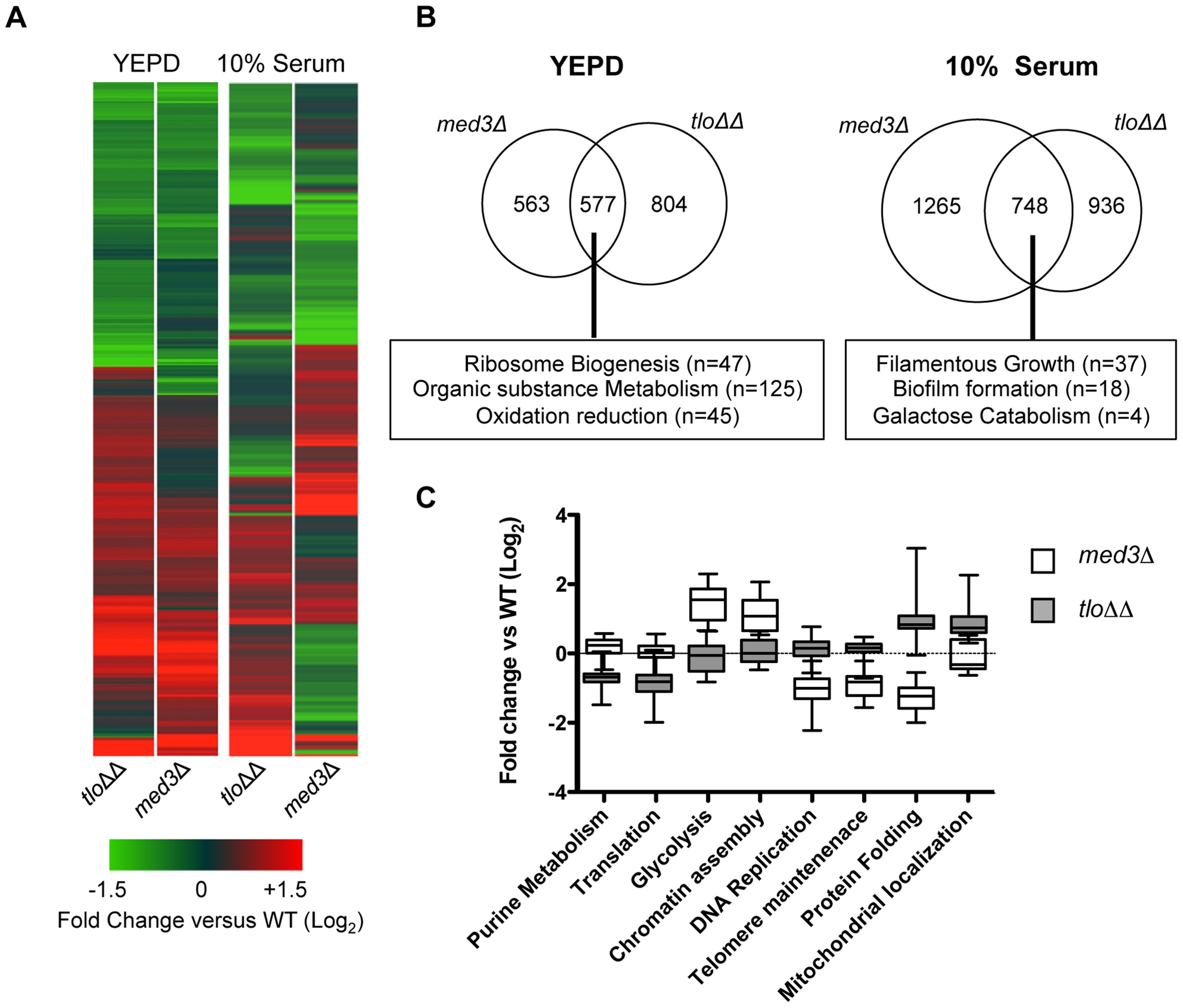 Microarray gene expression profiling of the <i>med3</i>Δ mutant in YEPD and 10% (v/v) serum.