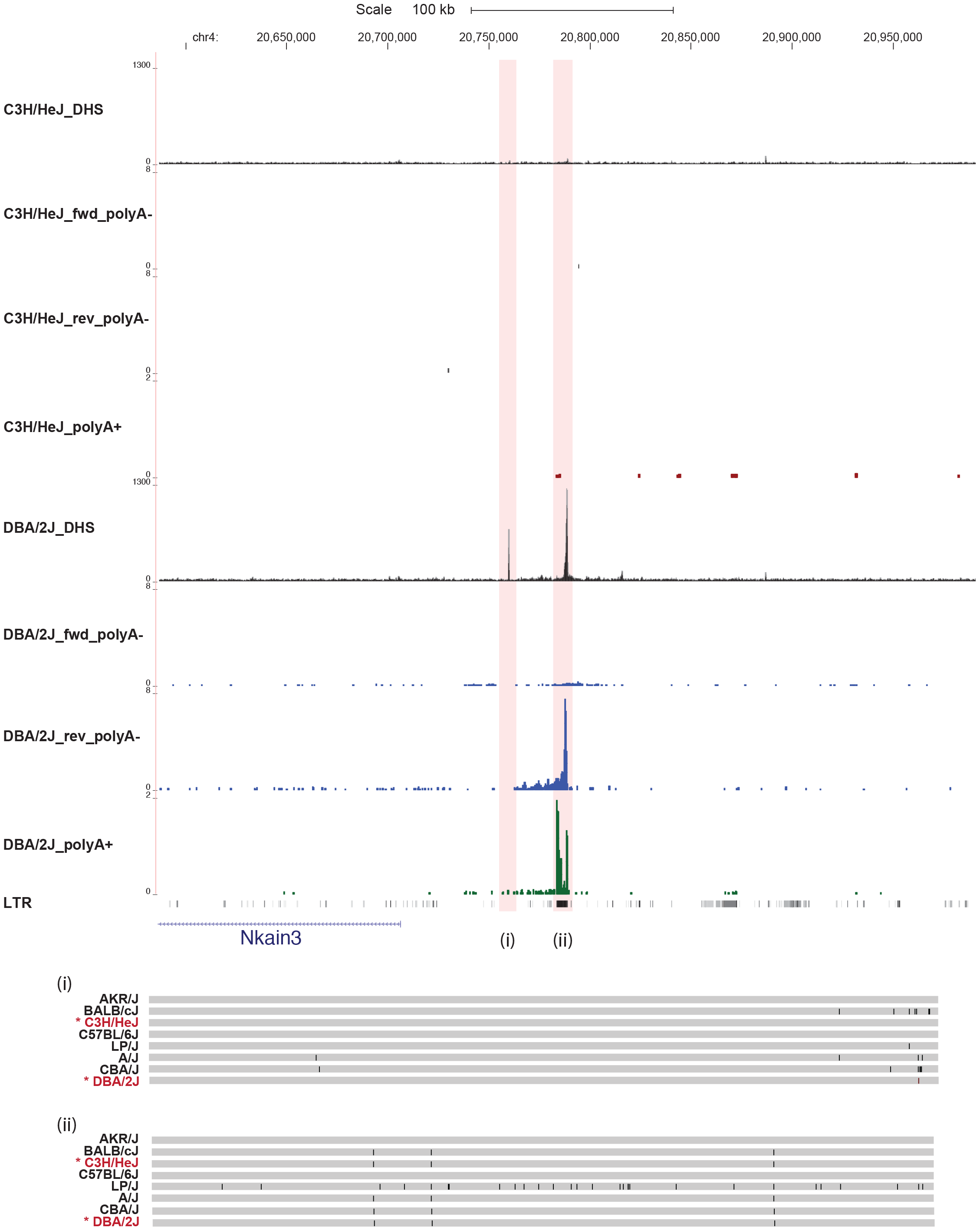 Some variable DNase I hypersensitive sites have no underlying sequence variation.