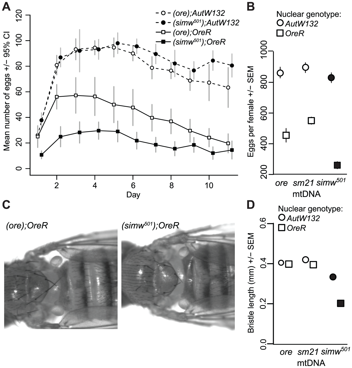 Effects of a mitochondrial–nuclear interaction on adult fecundity and sensory structures.