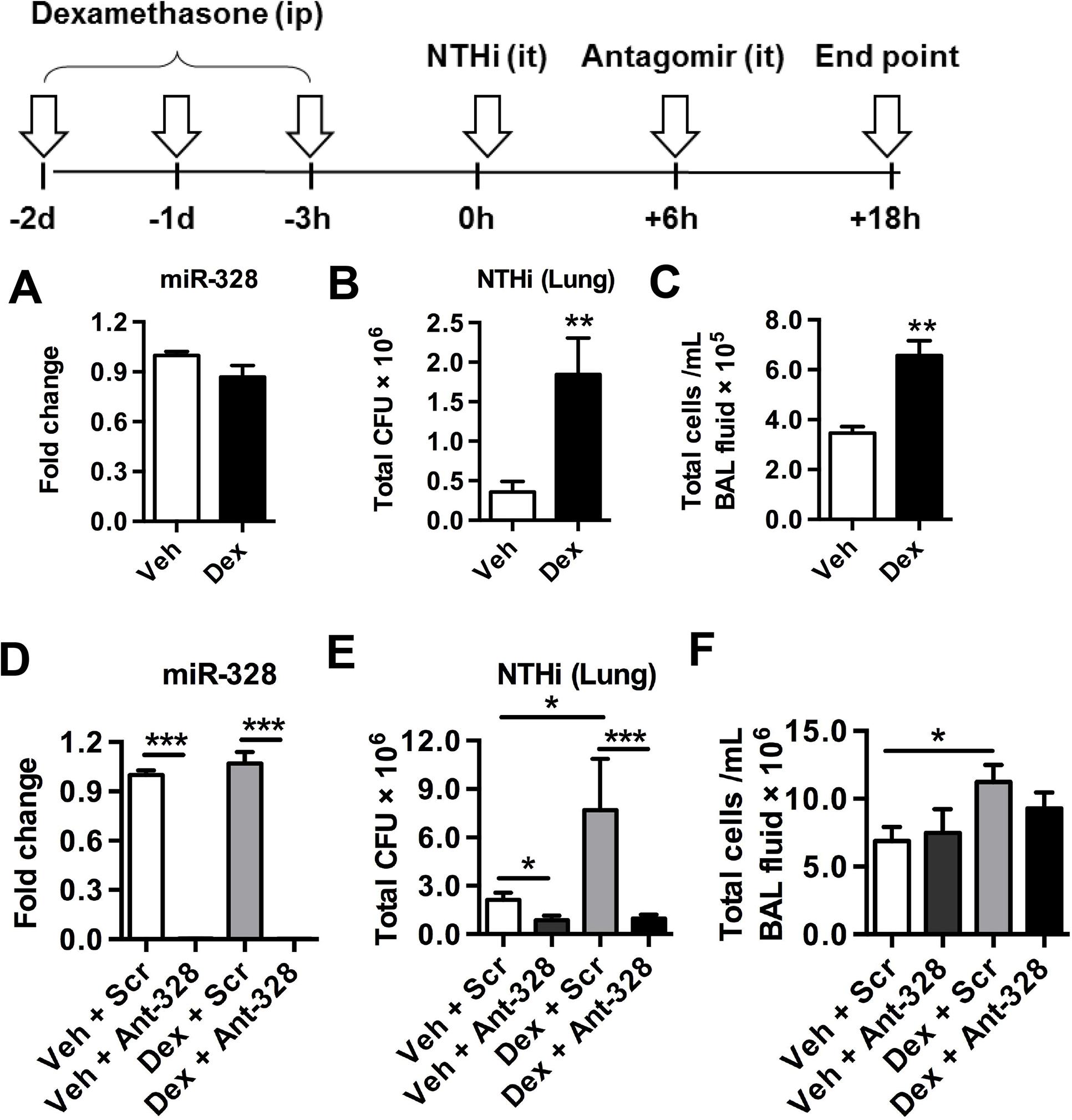 Inhibiting miR-328 enhances bacterial clearance in dexamethasone-mediated immune suppressed mice.