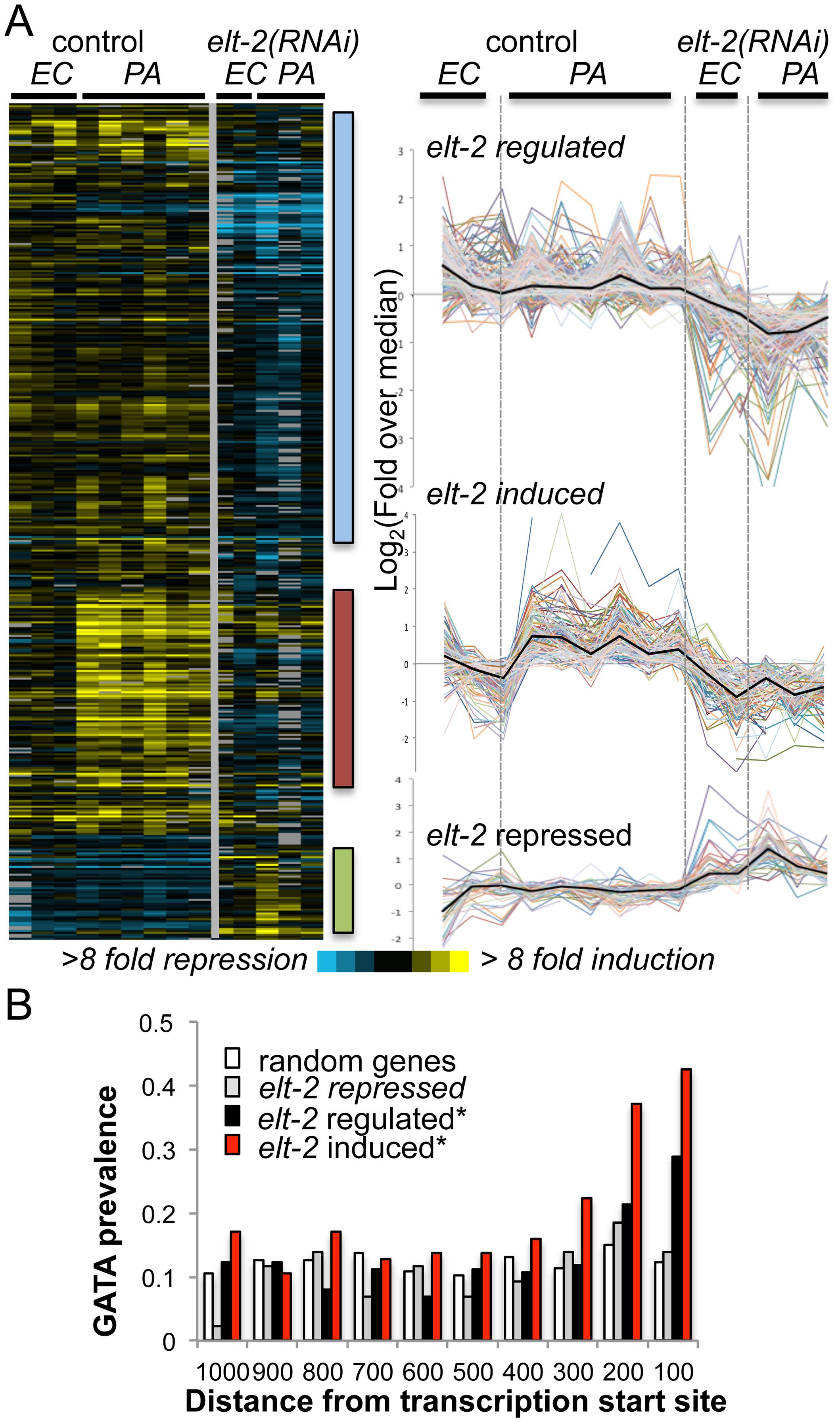 <i>elt-2</i> regulated genes.