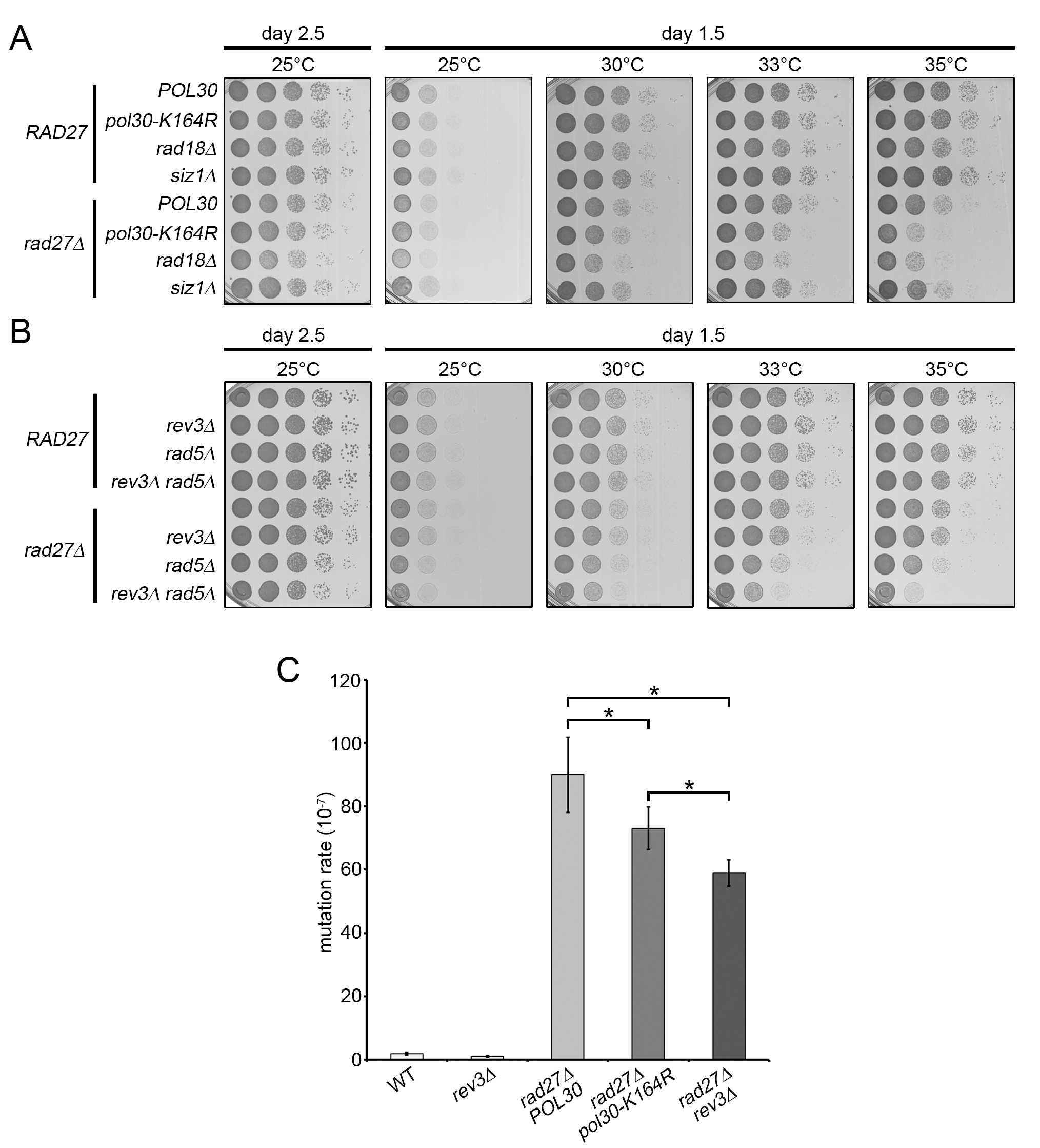 TLS and template switching are redundant in promoting <i>rad27Δ</i> viability.