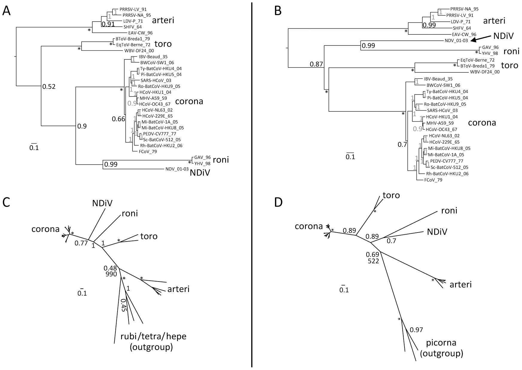 Phylogeny of nidoviruses.