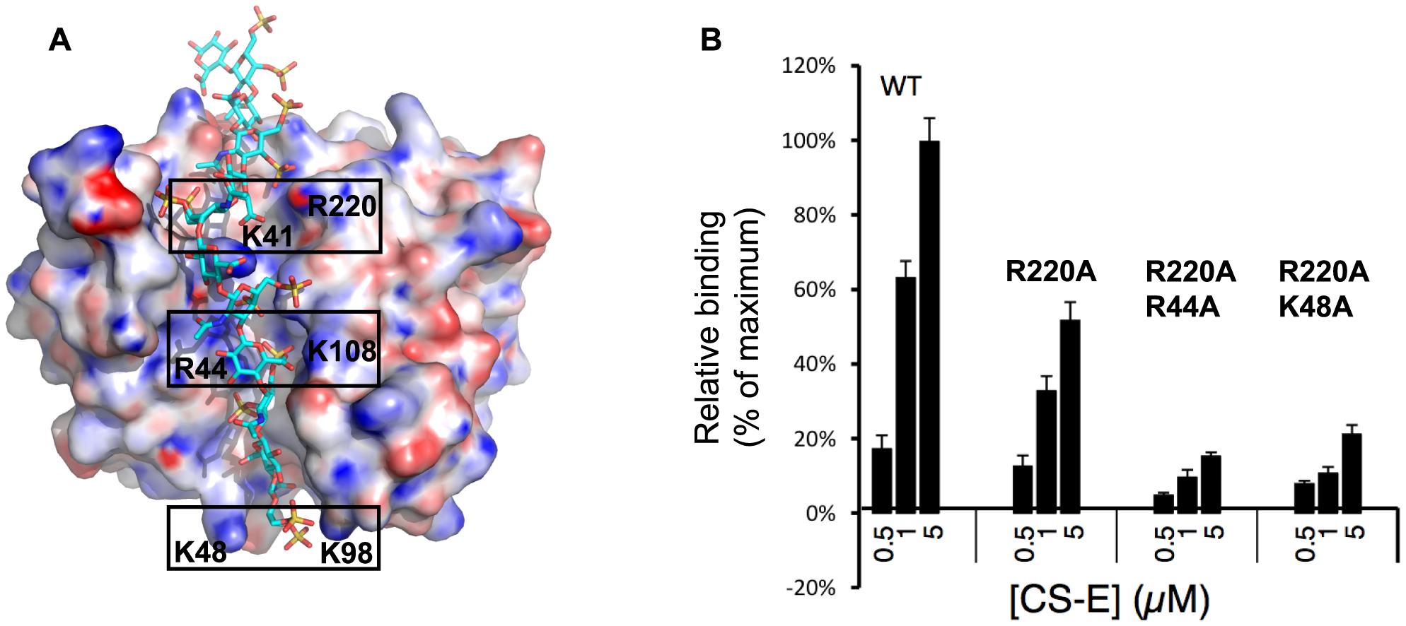 Mapping of the CS-E binding site on vaccinia D8 ectodomain.