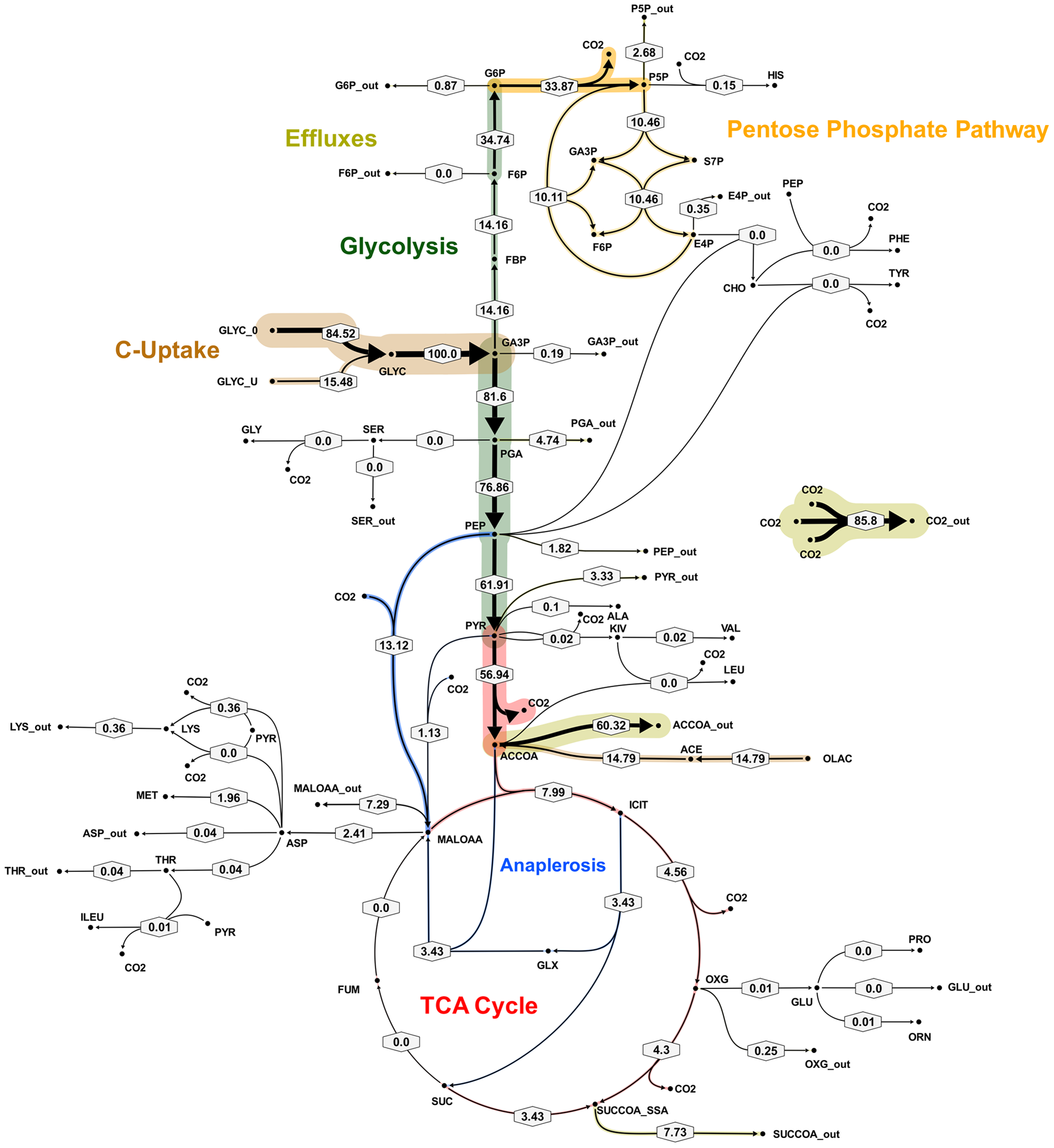 Metabolic flux map corresponding to solution A for <i>M. tuberculosis</i> in glycerol limited continuous culture at slow growth rate (t<sub>d</sub>=69 h).