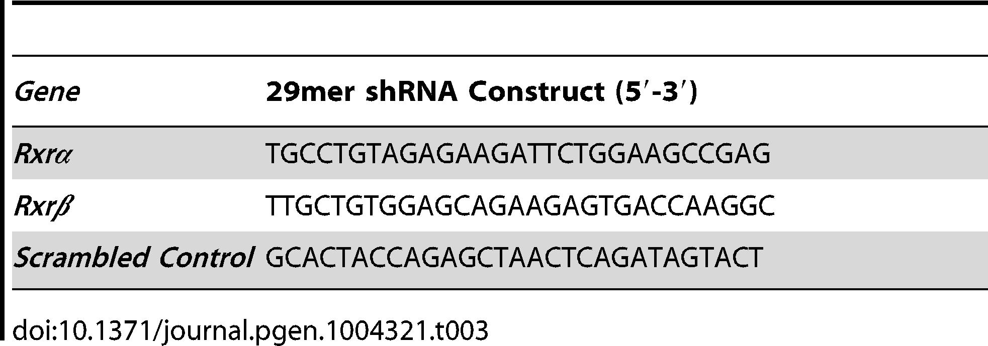 29mer shRNA constructs used for gene knockdown studies.