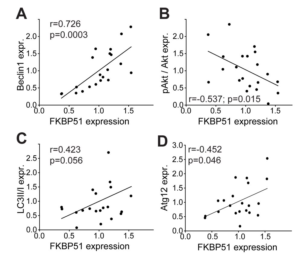 Correlation of FKBP51 with autophagy pathway components in human PBMCs.