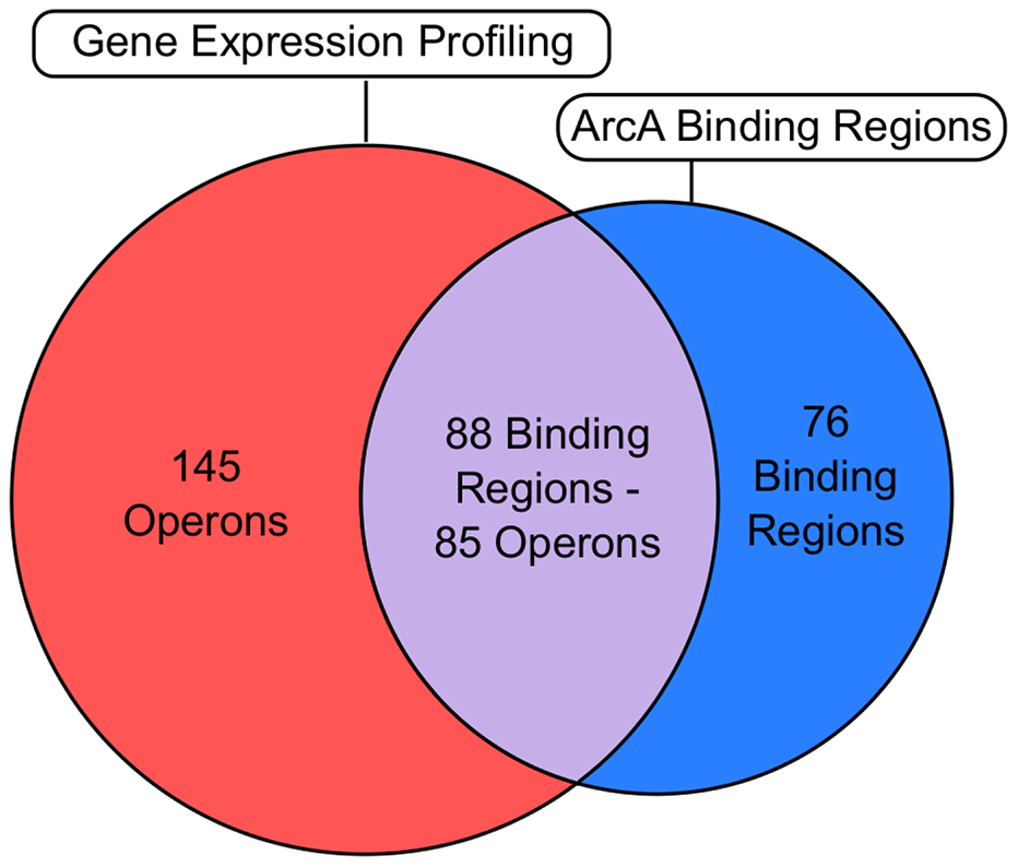 Correlation of the global binding site data with transcriptomic data.