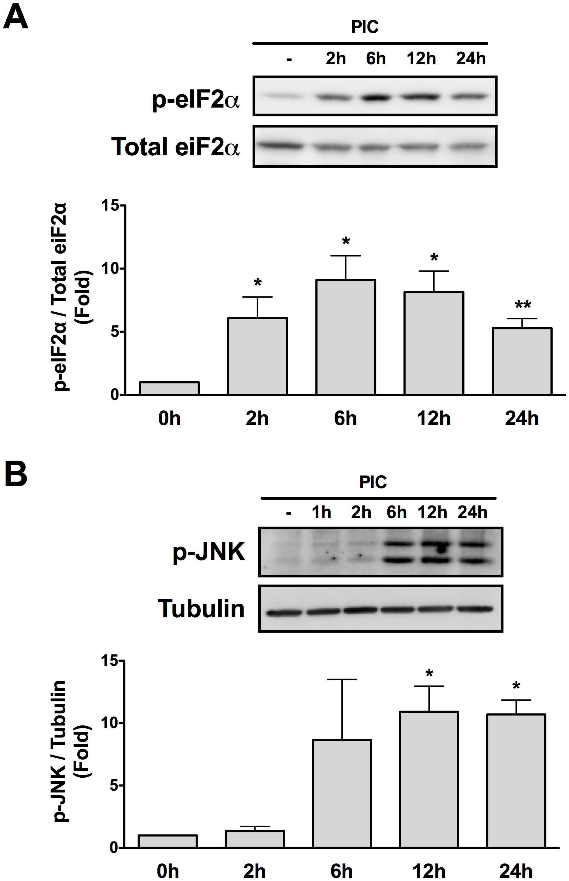 Internal dsRNA induces eIF2α and JNK phosphorylation.