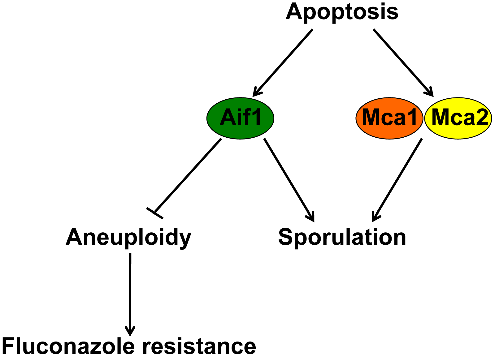 Mechanisms controlling ALCD, mating, and aneuploidy.