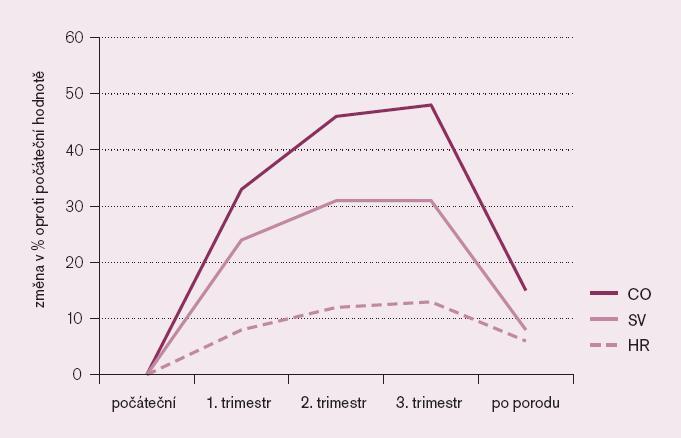 Změny systémové hemodynamiky v těhotenství.