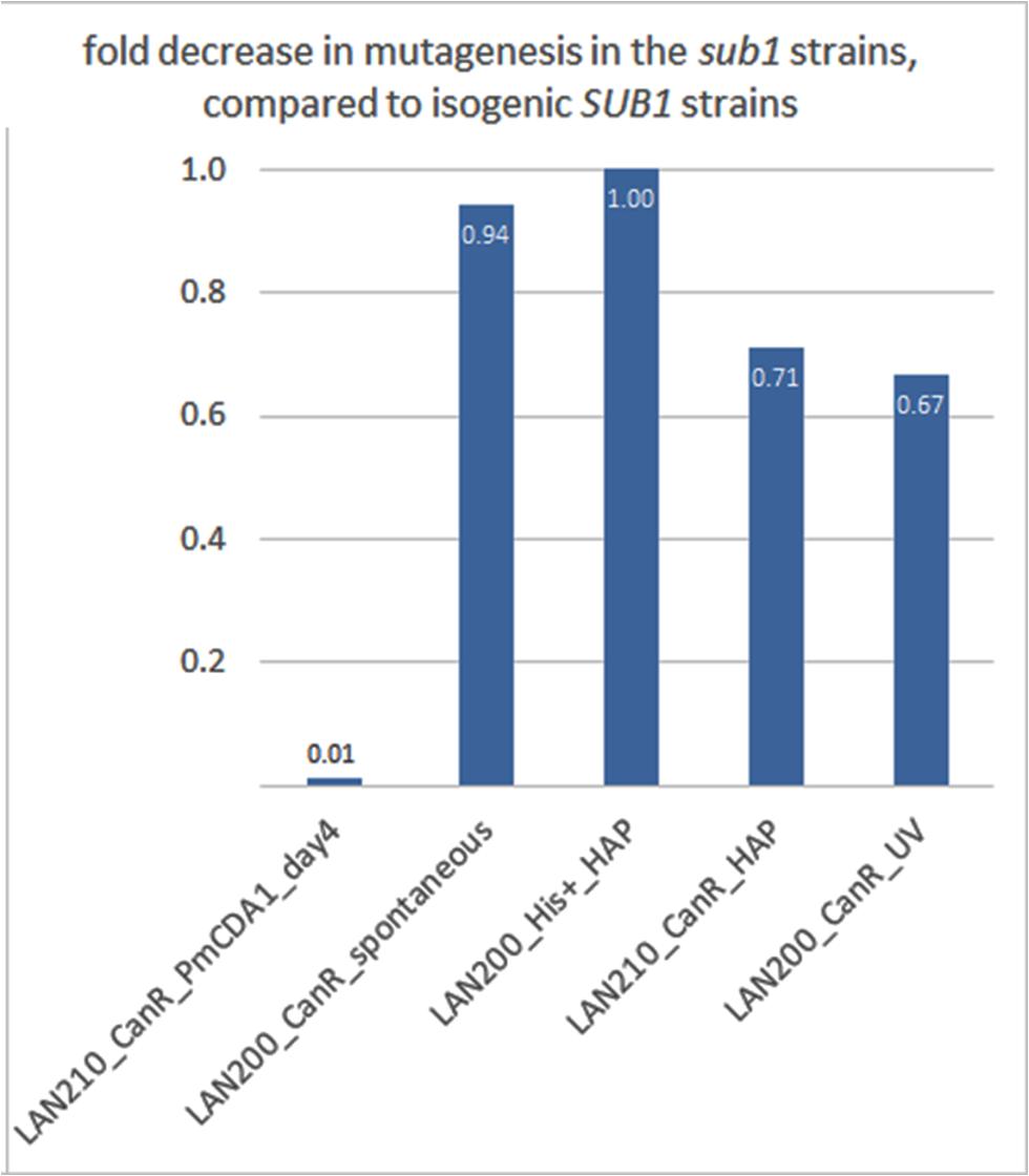 <i>SUB1</i> disruption specifically suppresses APOBEC-induced mutagenesis at the <i>can1</i> gene.