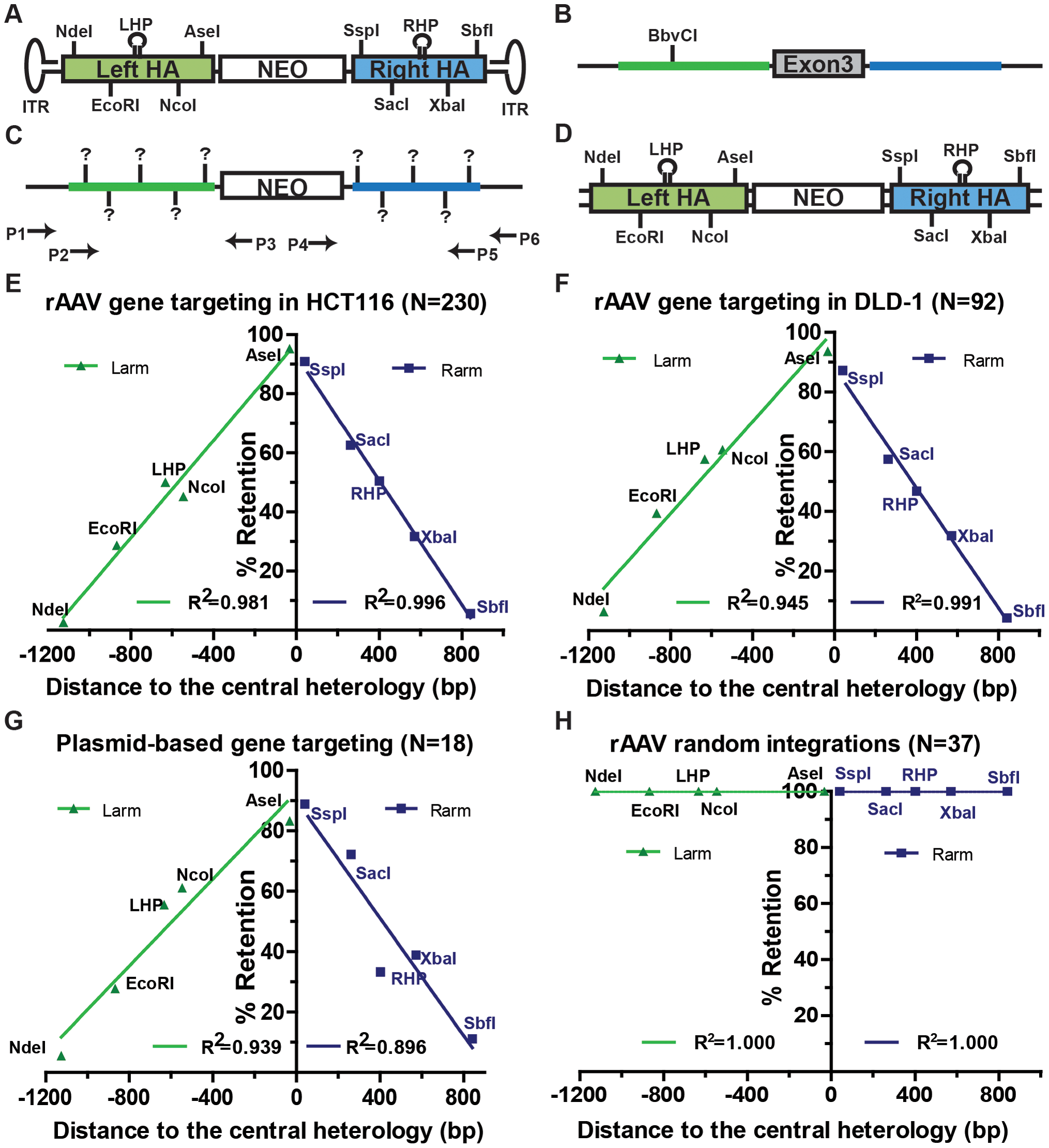 Gene targeting is marked by a characteristic SNP retention signature.