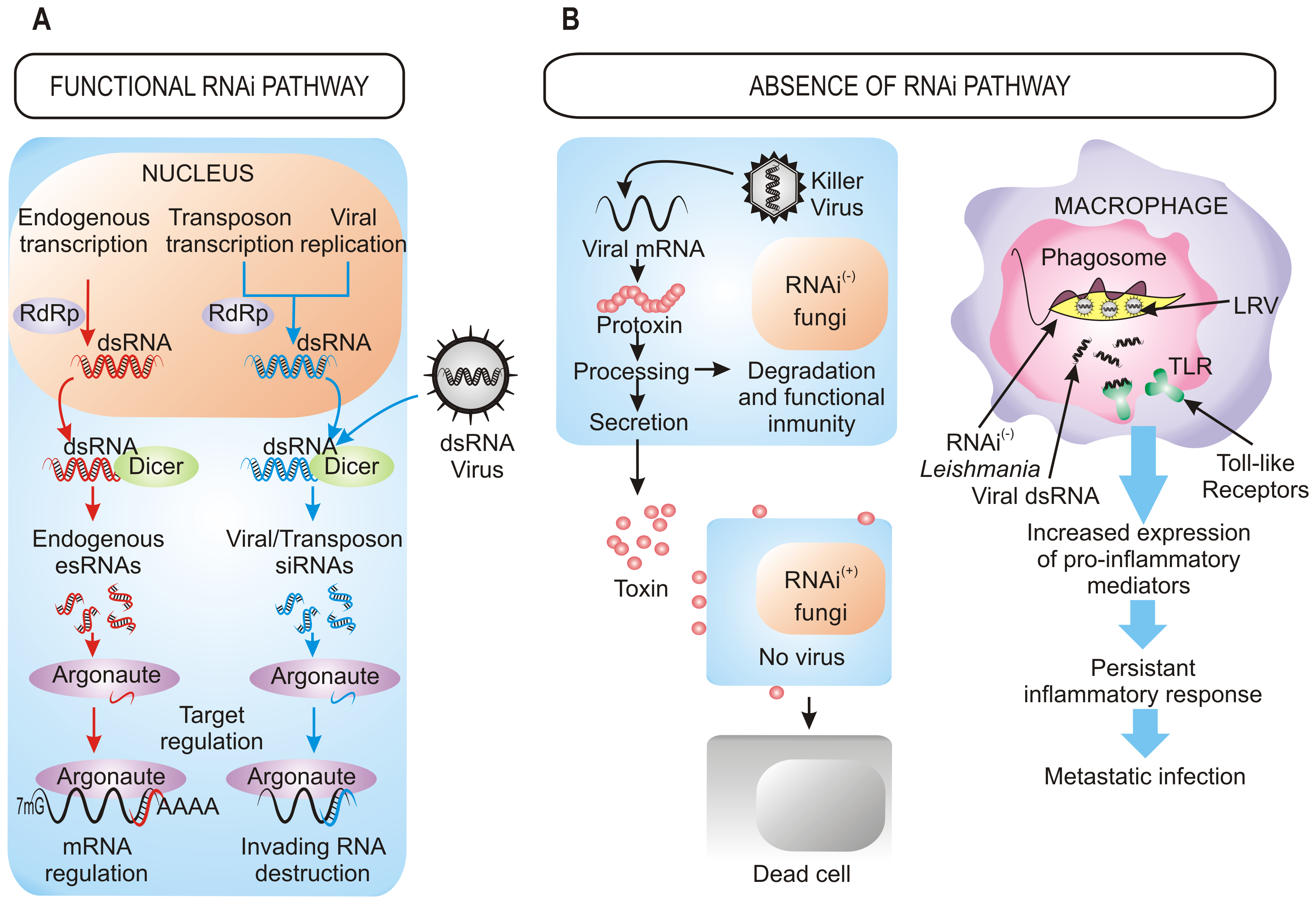 Benefits of the retention/loss of the RNAi pathway.