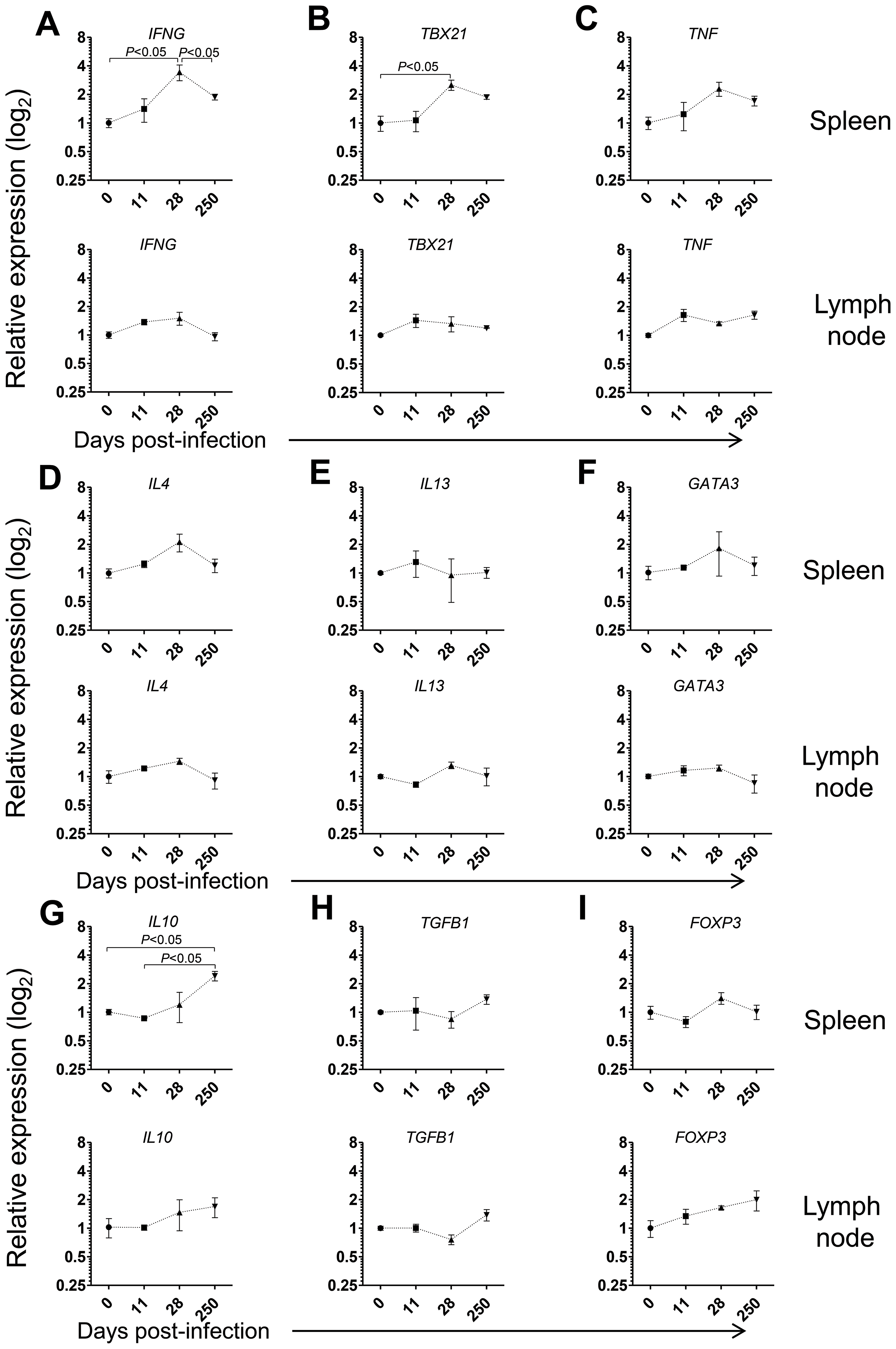 Gene expression profile of CD4 T cells in the spleen and LNs during <i>L. infantum</i> infection of rhesus macaques.