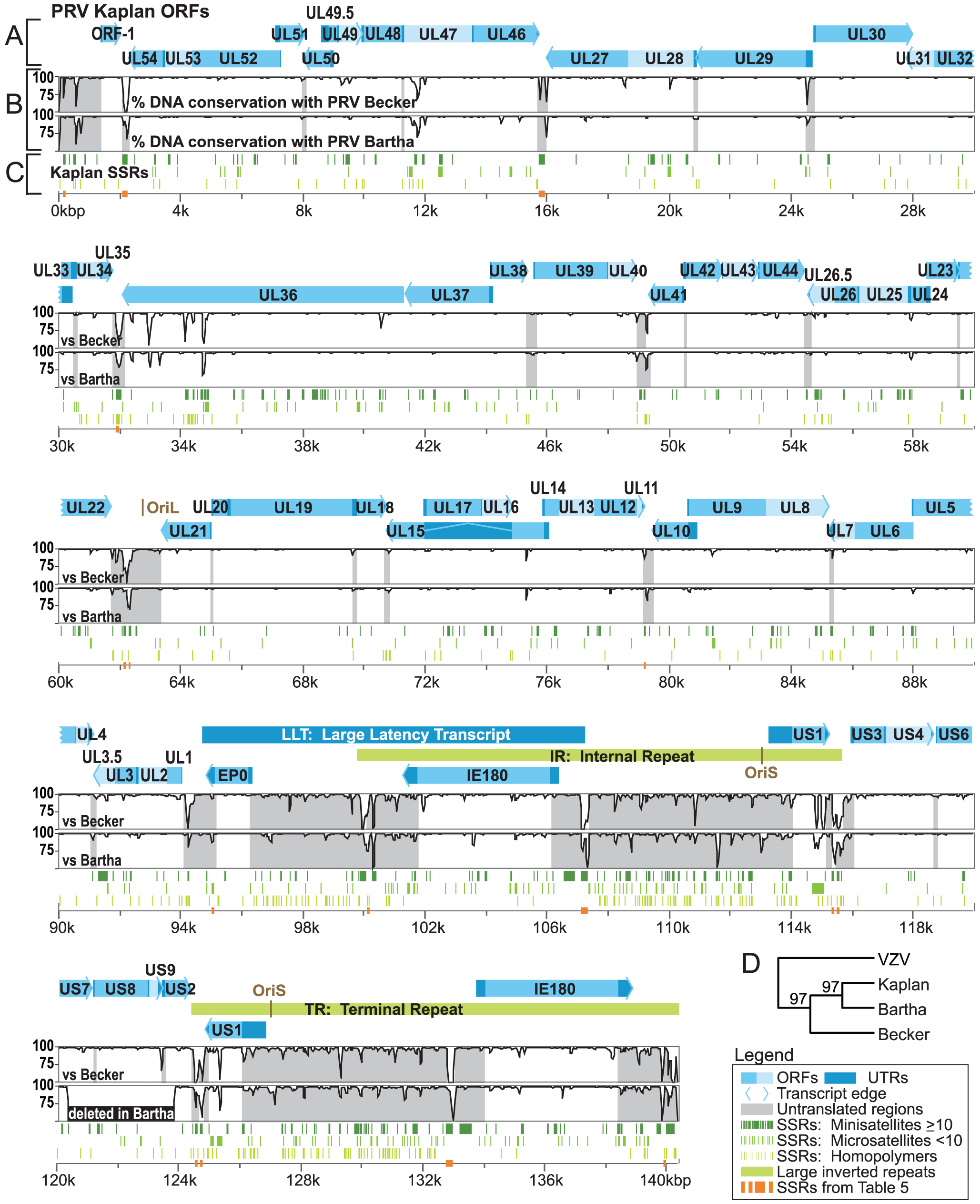 Genome organization of PRV Kaplan and comparison of sequence conservation with strains Becker and Bartha.