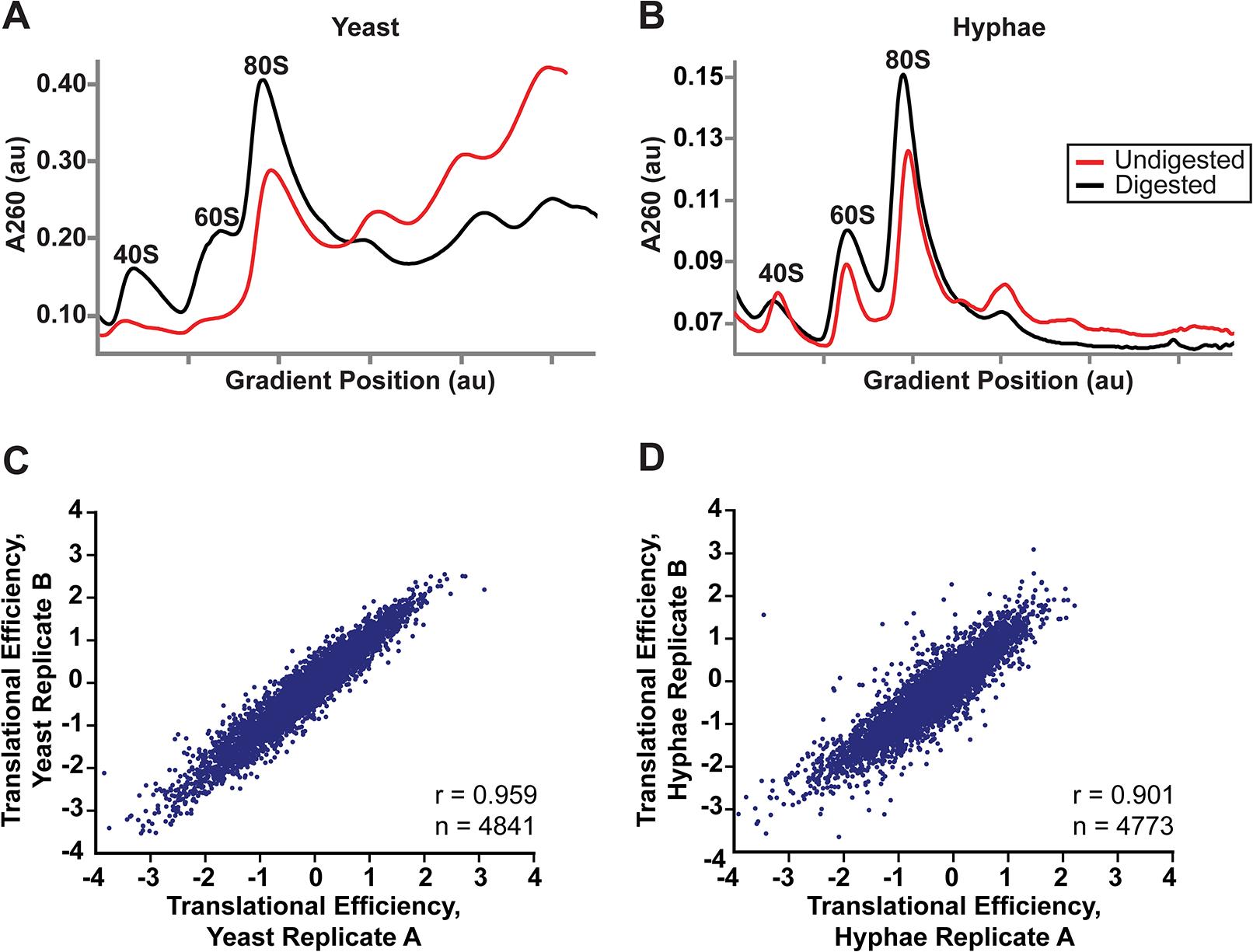 Successful adaptation of ribosome profiling to <i>Histoplasma</i>.