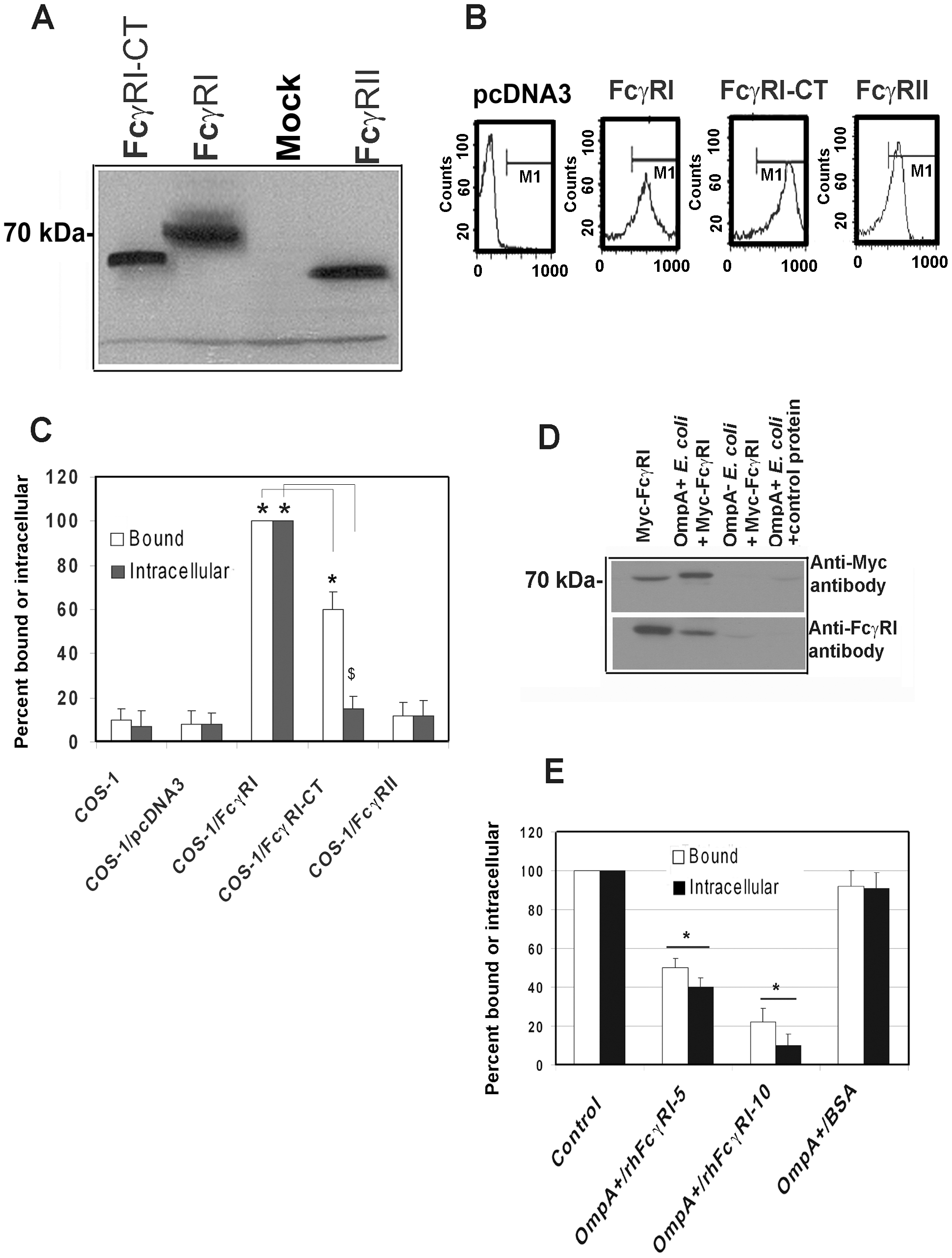 FcγRIa expression is sufficient to facilitate <i>E. coli</i> K1 invasion of COS-1 cells.