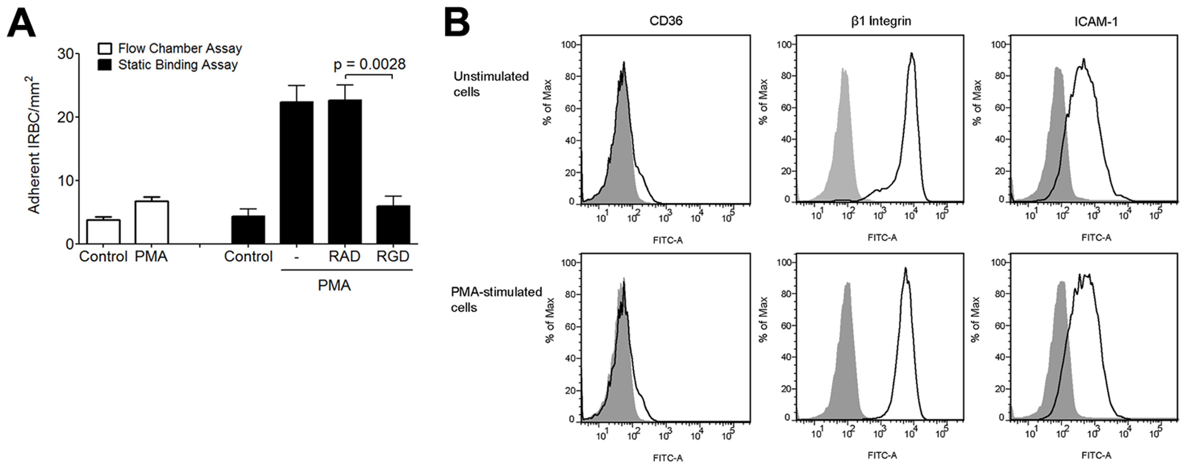 Effect of PMA on IRBC adhesion to HMEC-1.