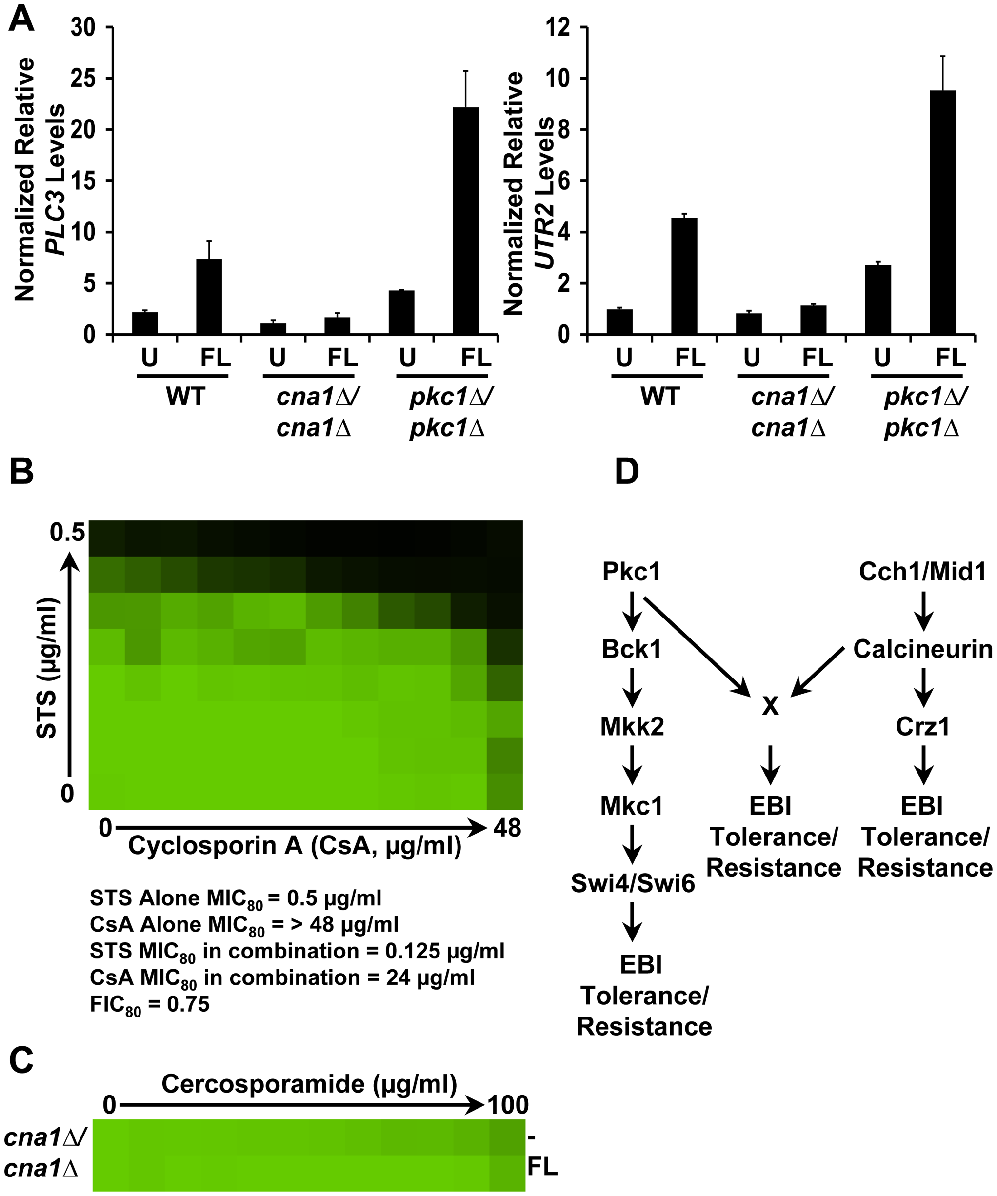 PKC signaling and calcineurin independently regulate tolerance to ergosterol biosynthesis inhibitors via a common target in <i>C. albicans</i>.